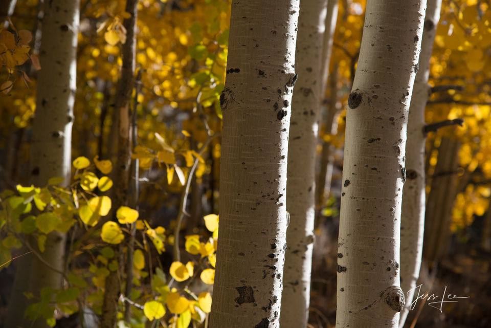 aspen, trees, yosemite, mountains, desert, death valley, ocean,