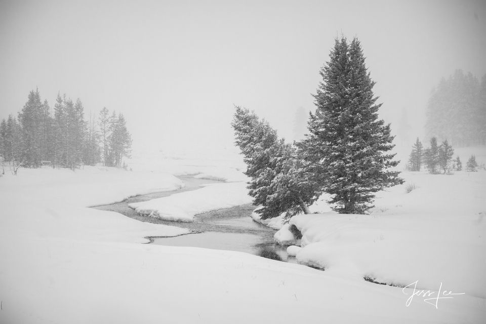 Museum Quality Fine Art Prints of leaning tree on a snowy morning at Soda Butte Creek photograph, winter, 07, snow,