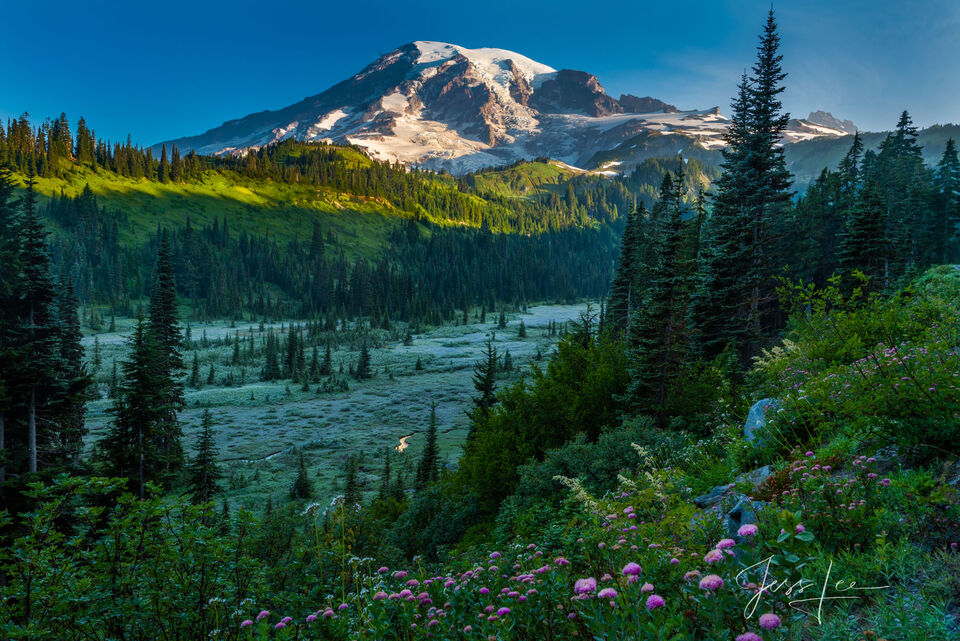 Fine Art Photography Print of Mt Rainier, Washington State, National Parks, wilderness photo, nature, mountain, summer, flowers, Pacific Northwest, PNW, flowers, field, evergreen trees, pine trees