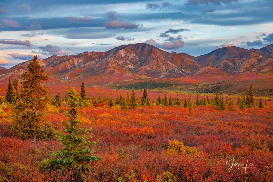 Denali National Park's landscape turning beautiful shades of red, orange, and yellow.