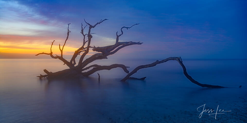 Ocean and dead trees at sunrise