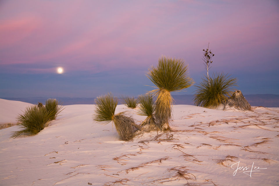 Dune, New Mexico, White Sands, desert, sand, Large format, quality, museum, fine art, print, jess lee, artist, western, cowboy, photographer, limited edition, high quality, high resolution, beautiful,