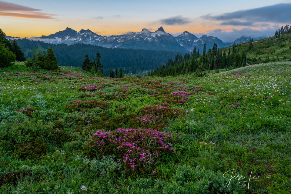 photo of Mount Rainier in Washington, Pacific Northwest photography, PNW, fine art prints, landscape, mountains, trees, evergreens, summer, flowers blooming, National Parks, mountain