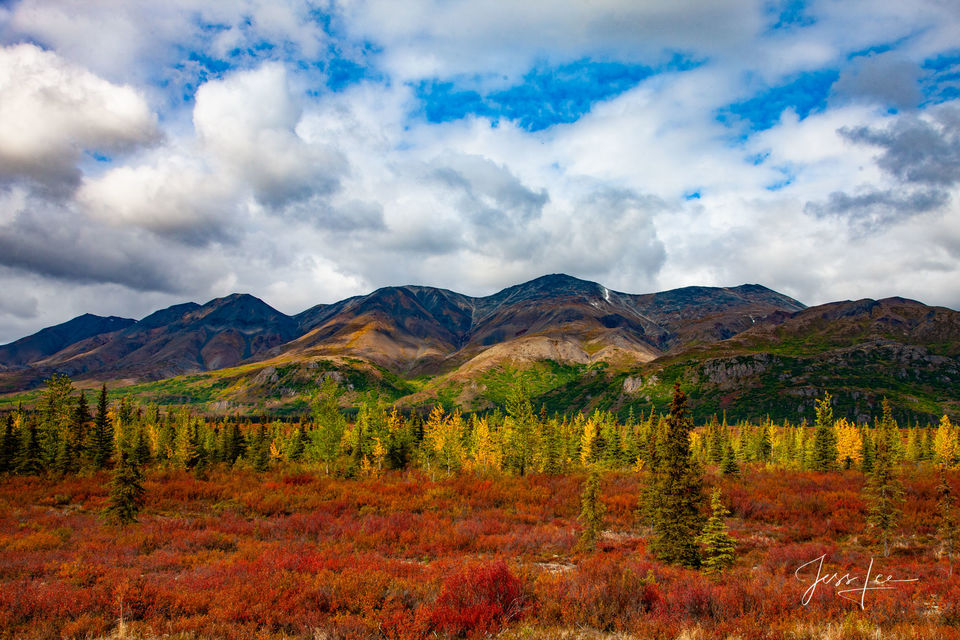 Trees turning autumn colors in the Alaskan wilderness.