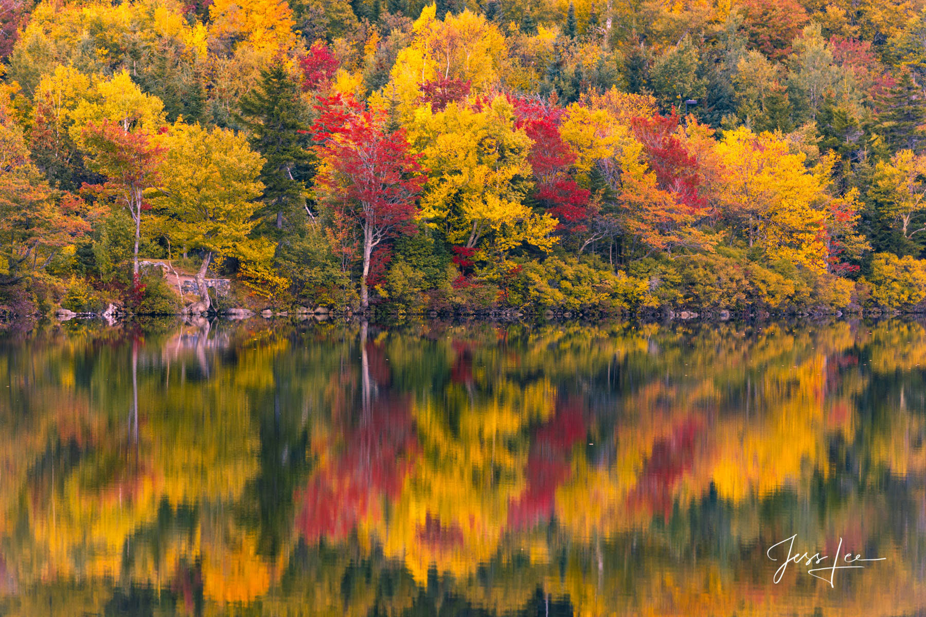 Fine Art Limited Edition of 200 Exclusive high-resolution Museum Quality Prints of  New England Trees reflecting in a pond. Photo...
