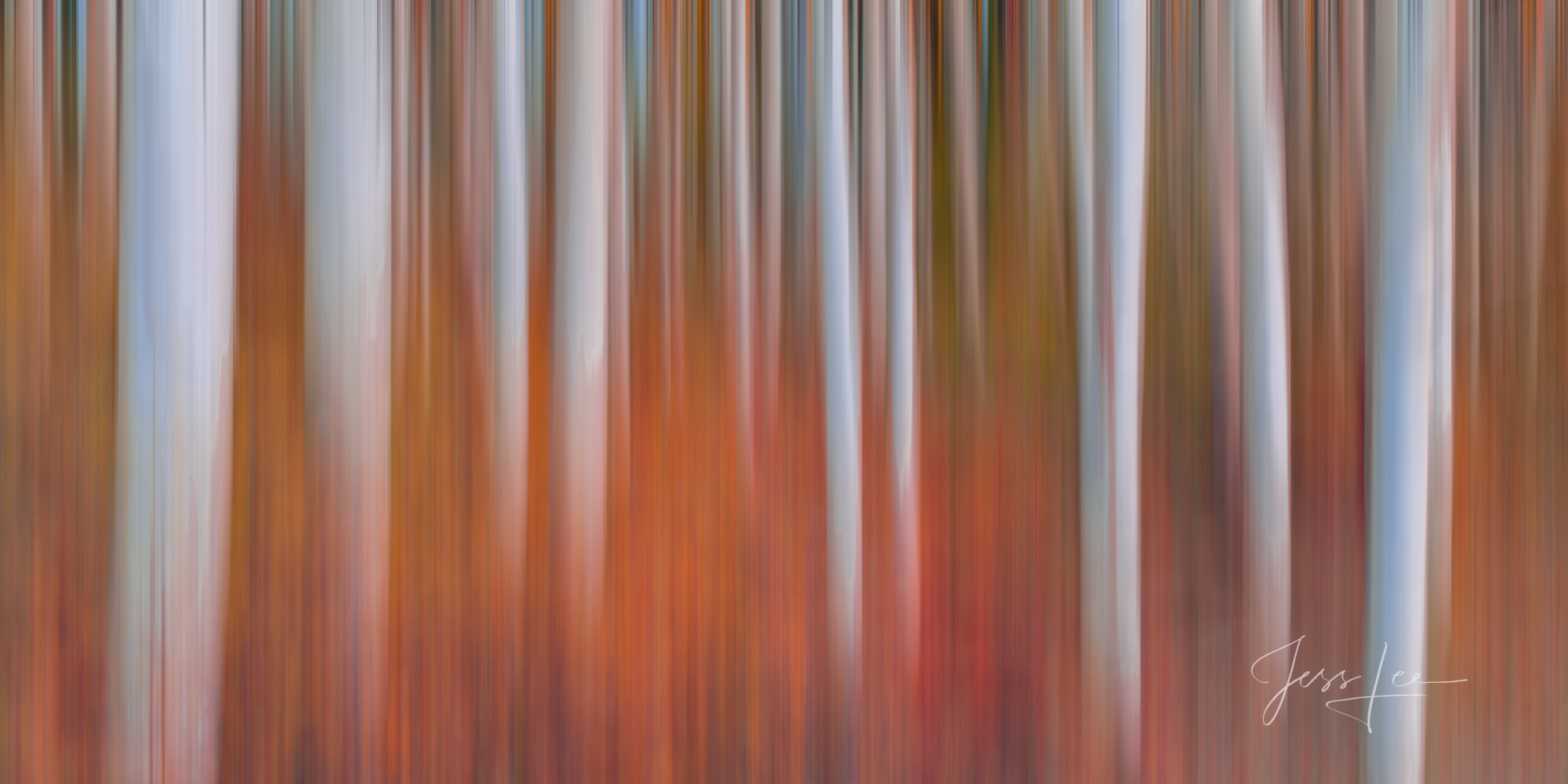 A Fall Color Photography Print of blurred Aspen Trees taken during the peak of Autumn Color. A limited Edition Fine Art print...