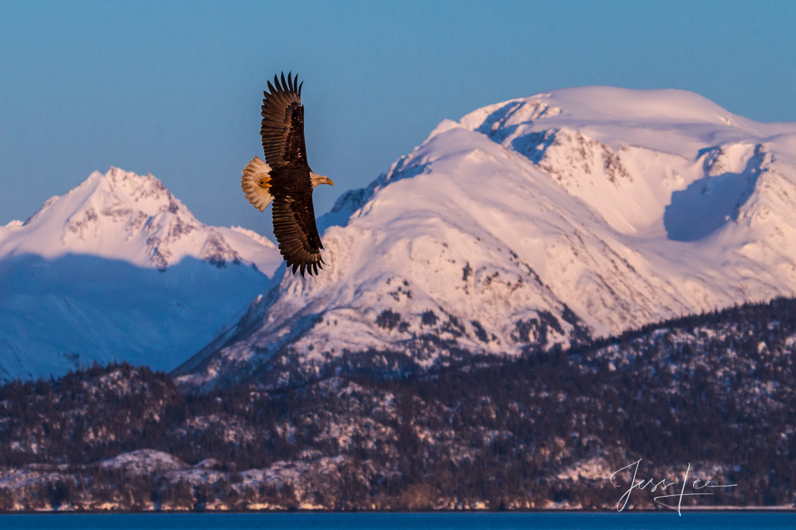 Bring home the power and beauty of the amazing fine art American Bald Eagle photograph Far North by Jess Lee from his Wildlife...