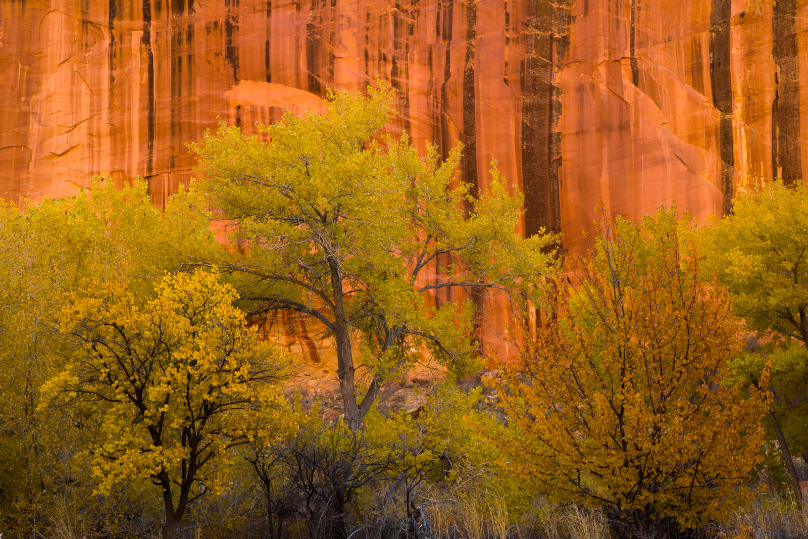 Limited Edition of 50 Fine Art Prints Canyon Bloom: Capitol Reef, San Rafael Swell and the Waterpocket Fold are some of the least...