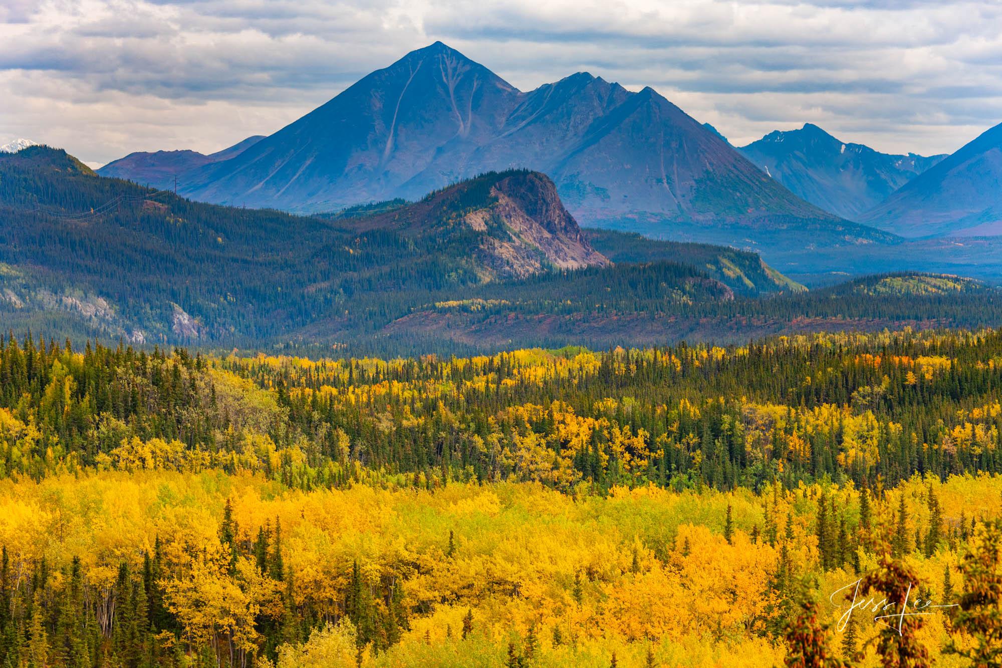 Alaska, high quality, prints, landscape, wolf, moose, fine art,, photo