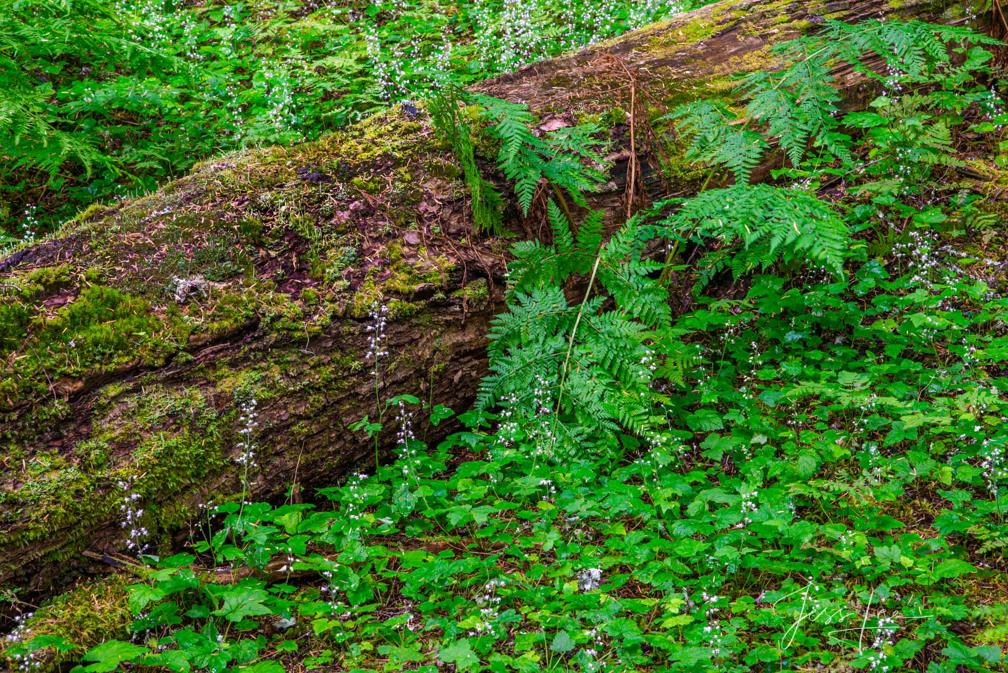 Green Leaves and fallen Tree