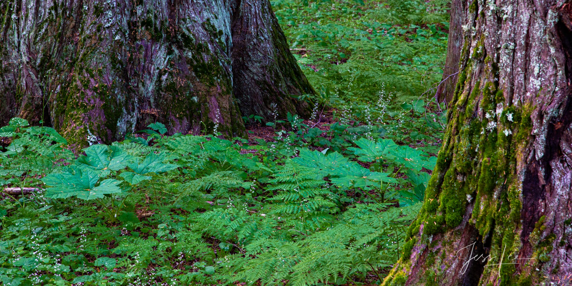 Forest Floor with green leaves
