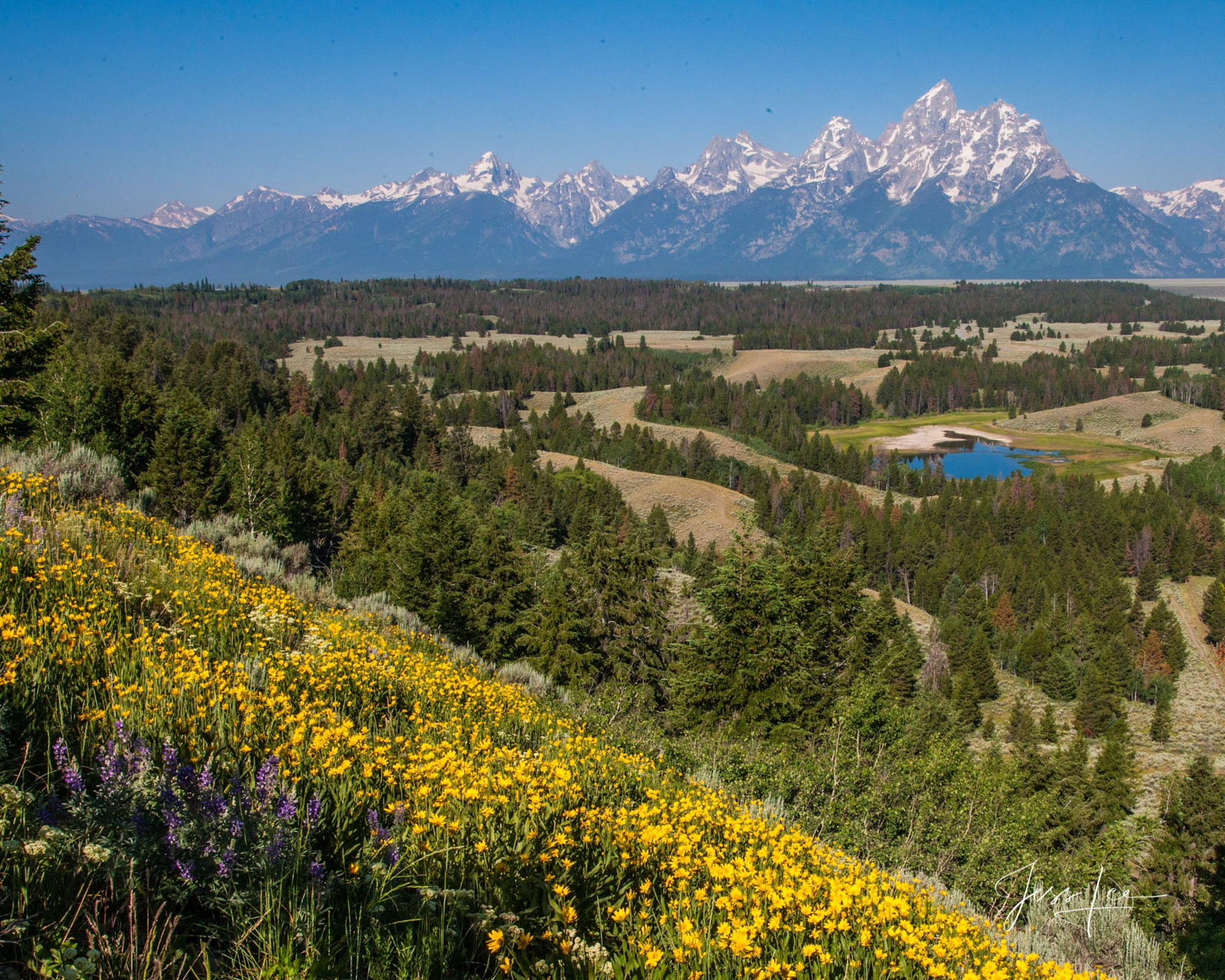 Limited Edition Picture of Grand Teton in Spring