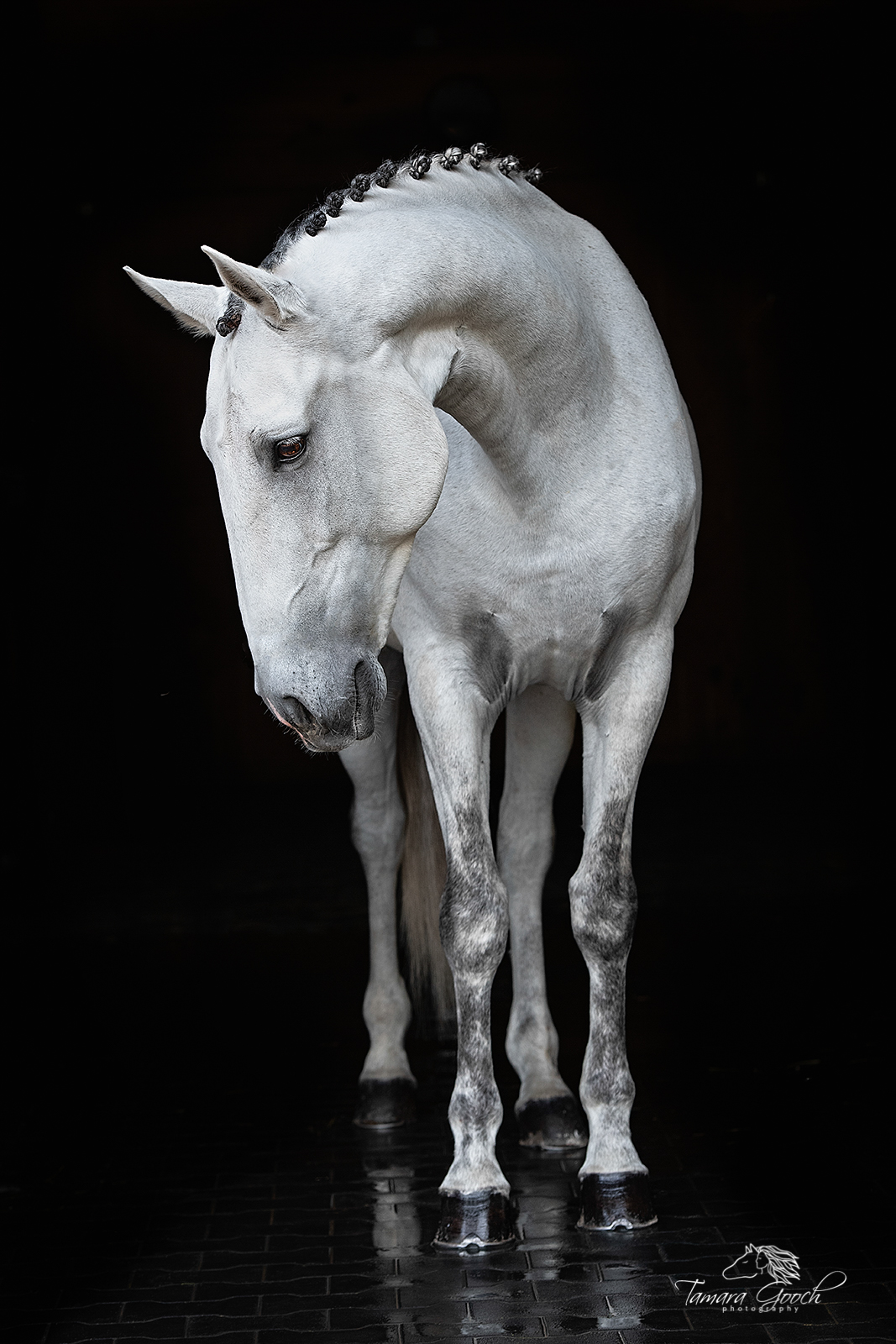 Fine Art Limited Edition Photography of Beautiful Horses. ______ Beautiful Horses_____.This is part of the luxurious collection...