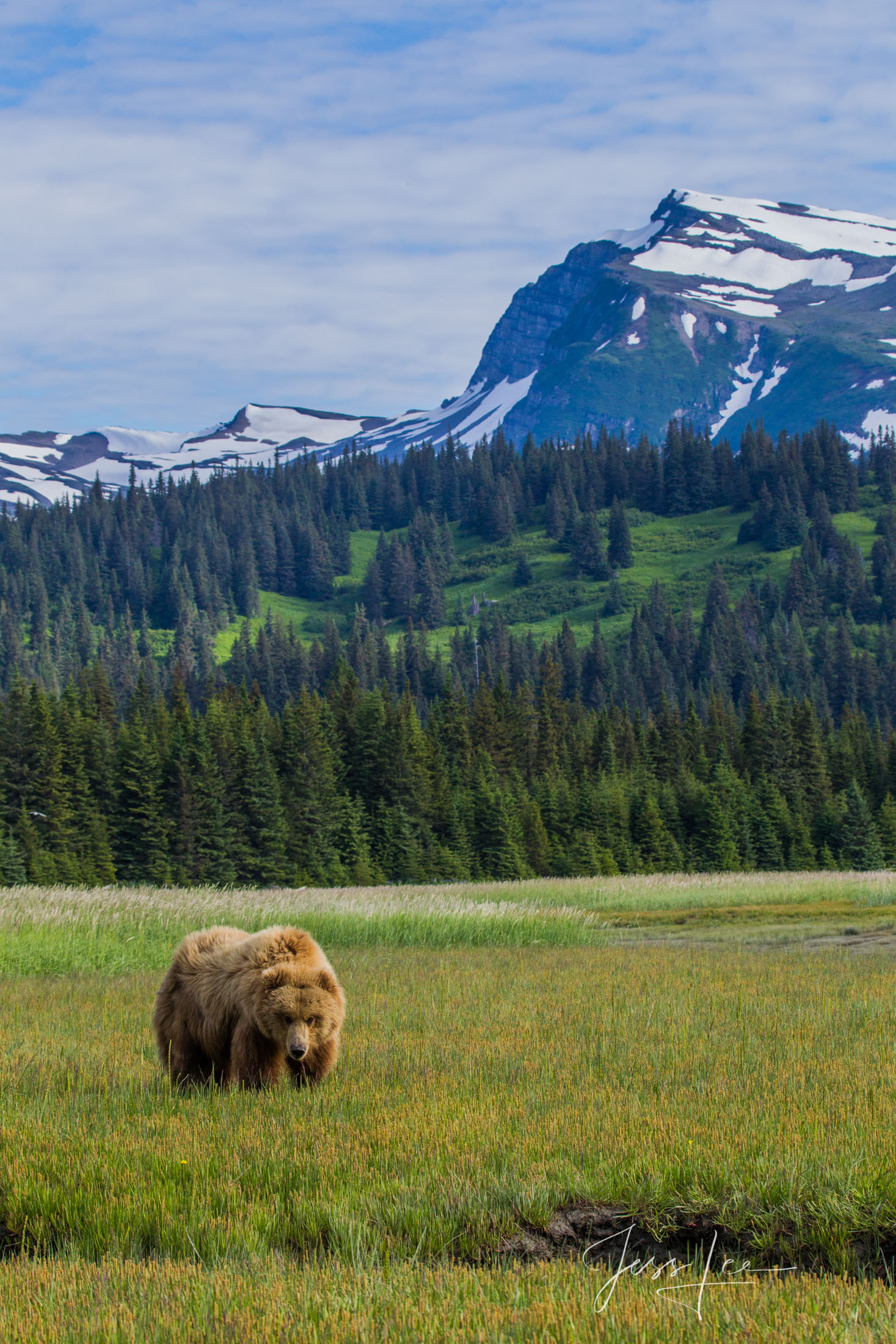 Grizzly Bear at Lake Clark  fine art limited edition of 300 prints