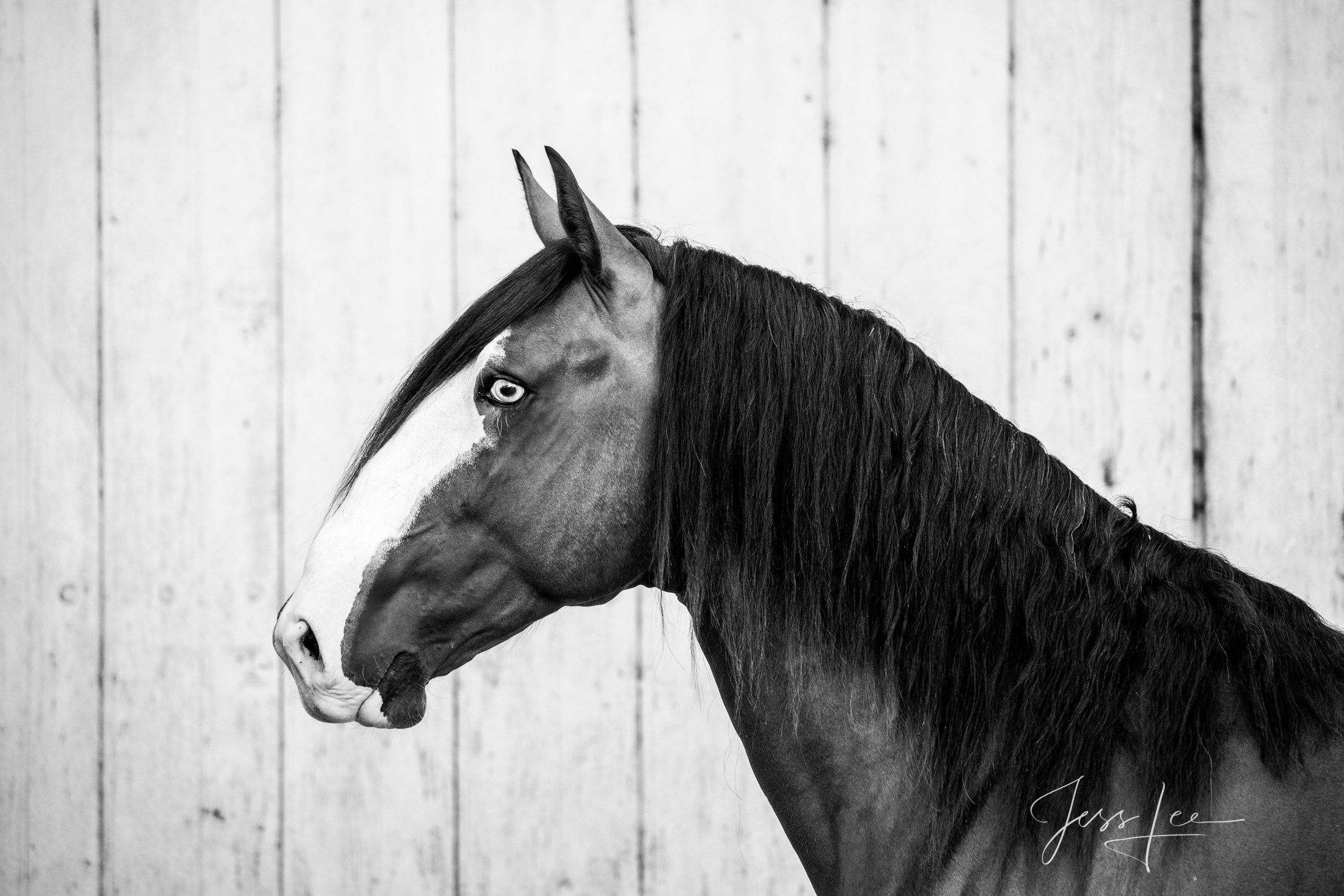 Camargue #1-1 Fine Art, Limited Edition, Luxurious photographic prints of the horses of the Camargue and Provence region of France...