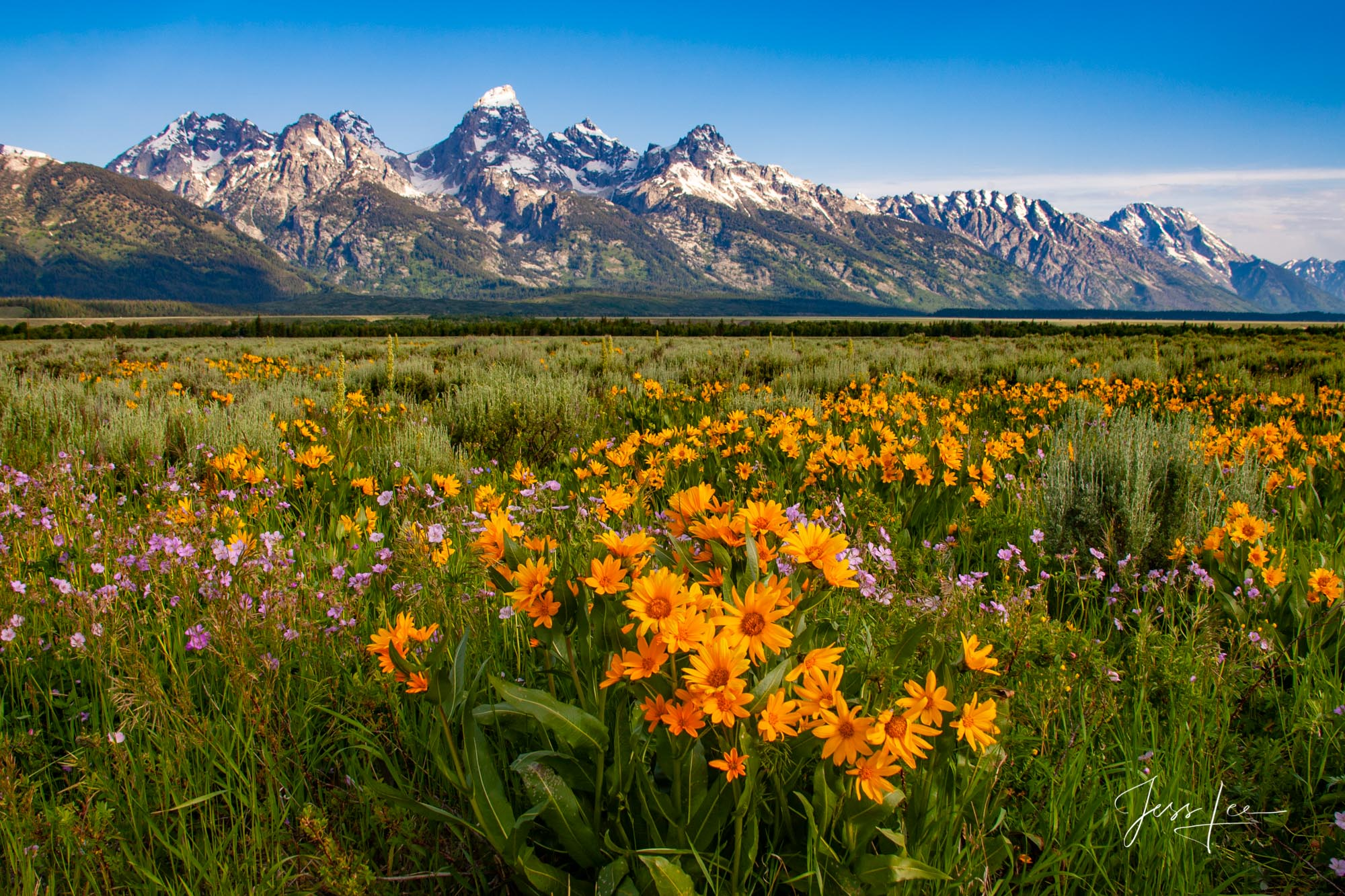 photo of Grand Tetons in Wyoming, spring, flowers, landscape photography, plants, greenery, bright colors, mountain photo, Jackson Hole, National Park, blue sky, fine art print, high quality, high res, photo