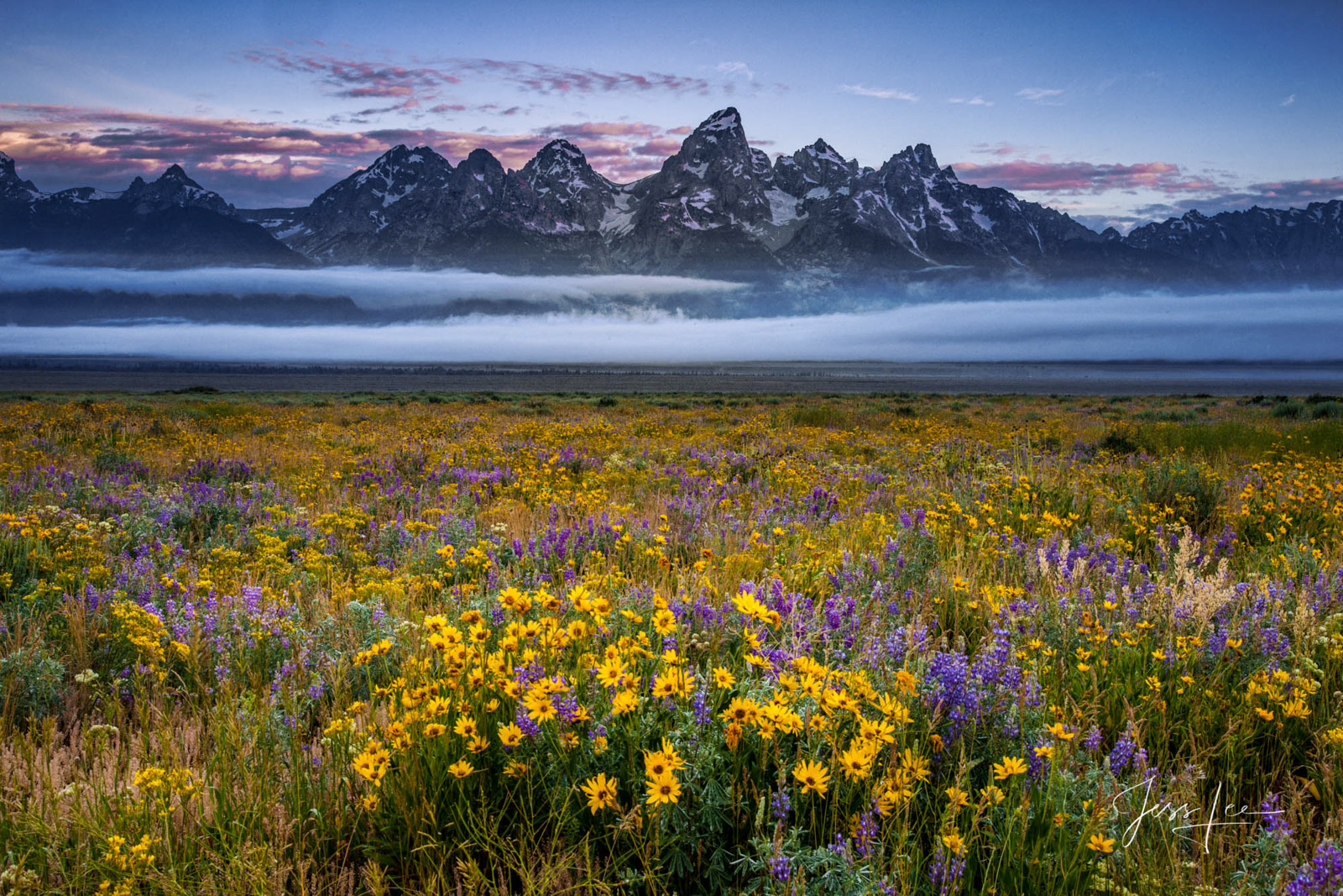 wyoming, grand teton, jackson hole, spring, flowers,  mountains, museum quaiity, fine art, print, jess lee, artist, photographer, limited edition,, photo