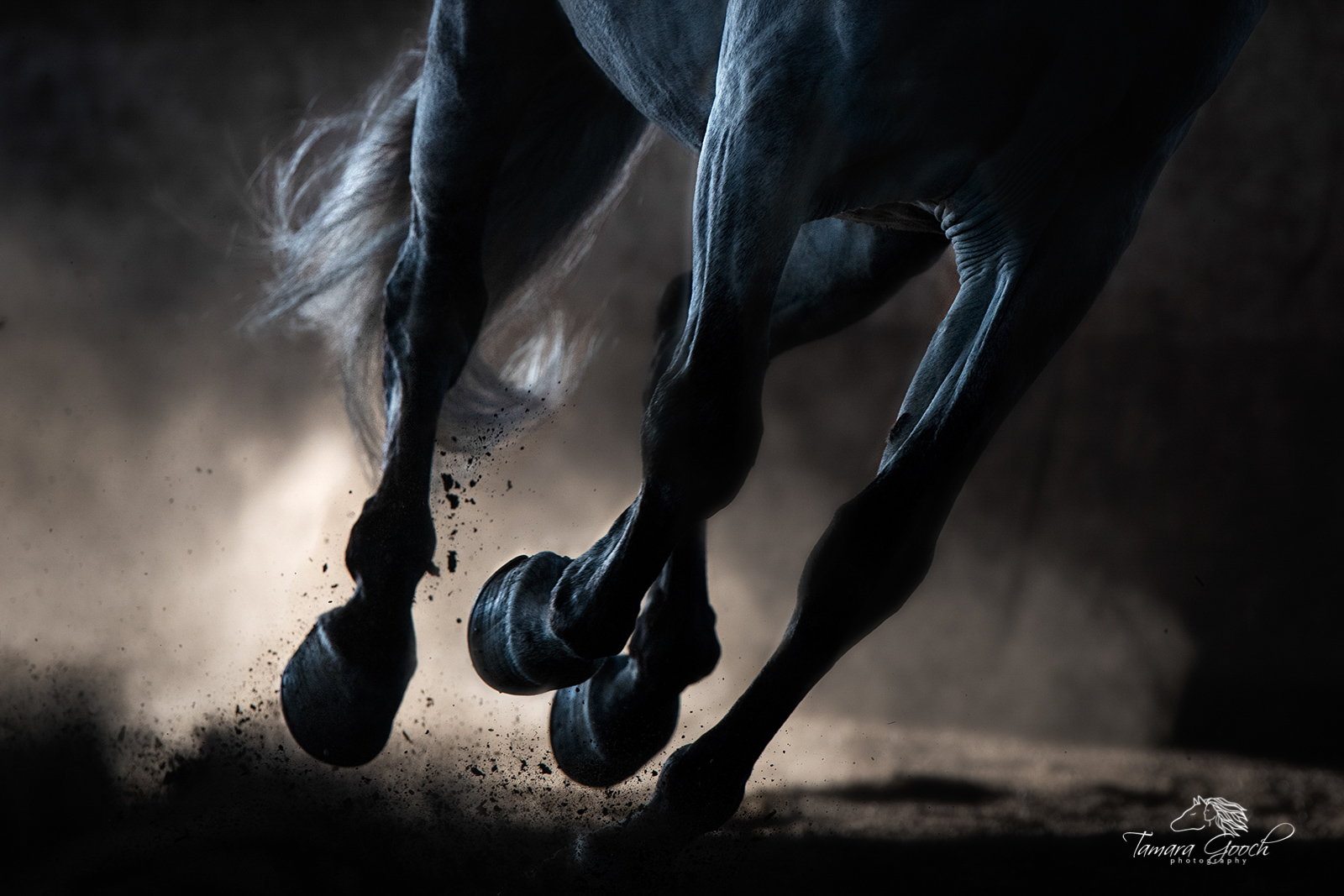 A photograph of a horses legs, tail and hooves in the dust.