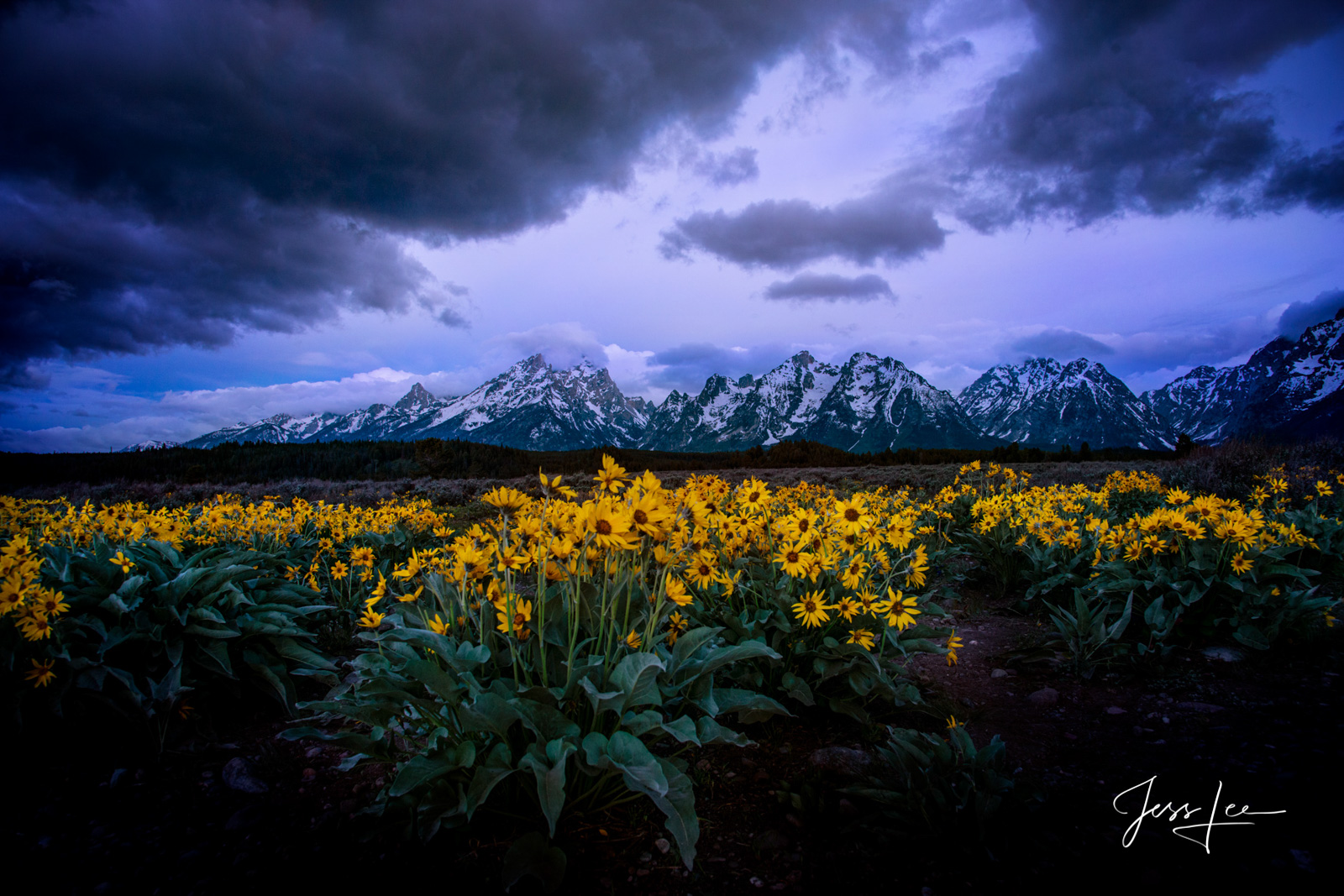 Fine Art Limited Edition of 250 Exclusive high-resolution Museum Quality Pictures of the Tetons.  They say spring storms bring...