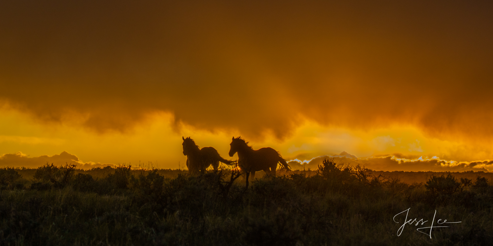 Fine Art Limited Edition Photography of Wild Herd of Mustang Horses. Wild Horses or Mustang herd running ahead of the storm....
