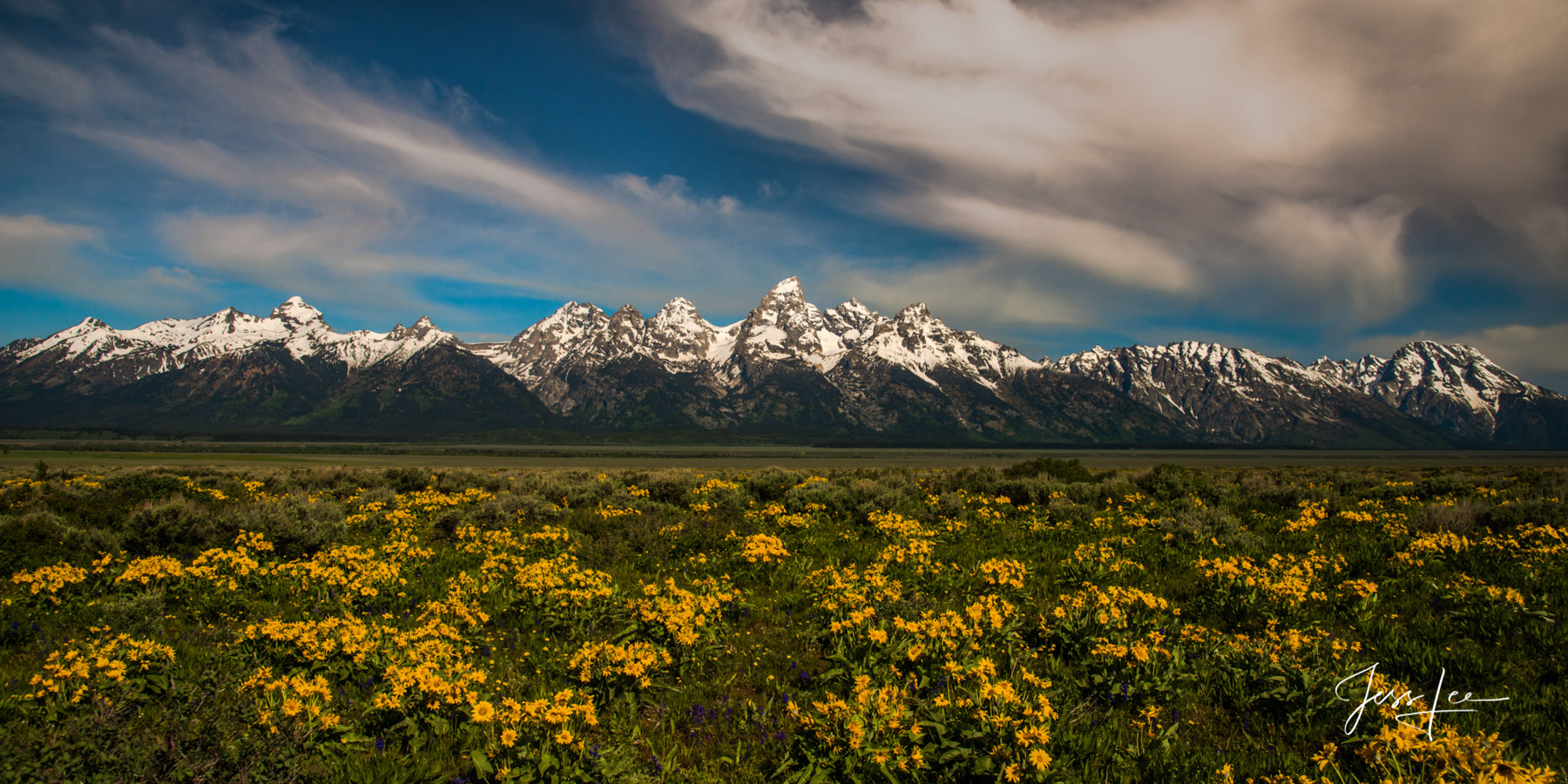 Limited Edition of 50 Exclusive high-resolution Museum Quality Fine Art Prints of Jackson Hole Wyoming carpeted with Balsam Root...