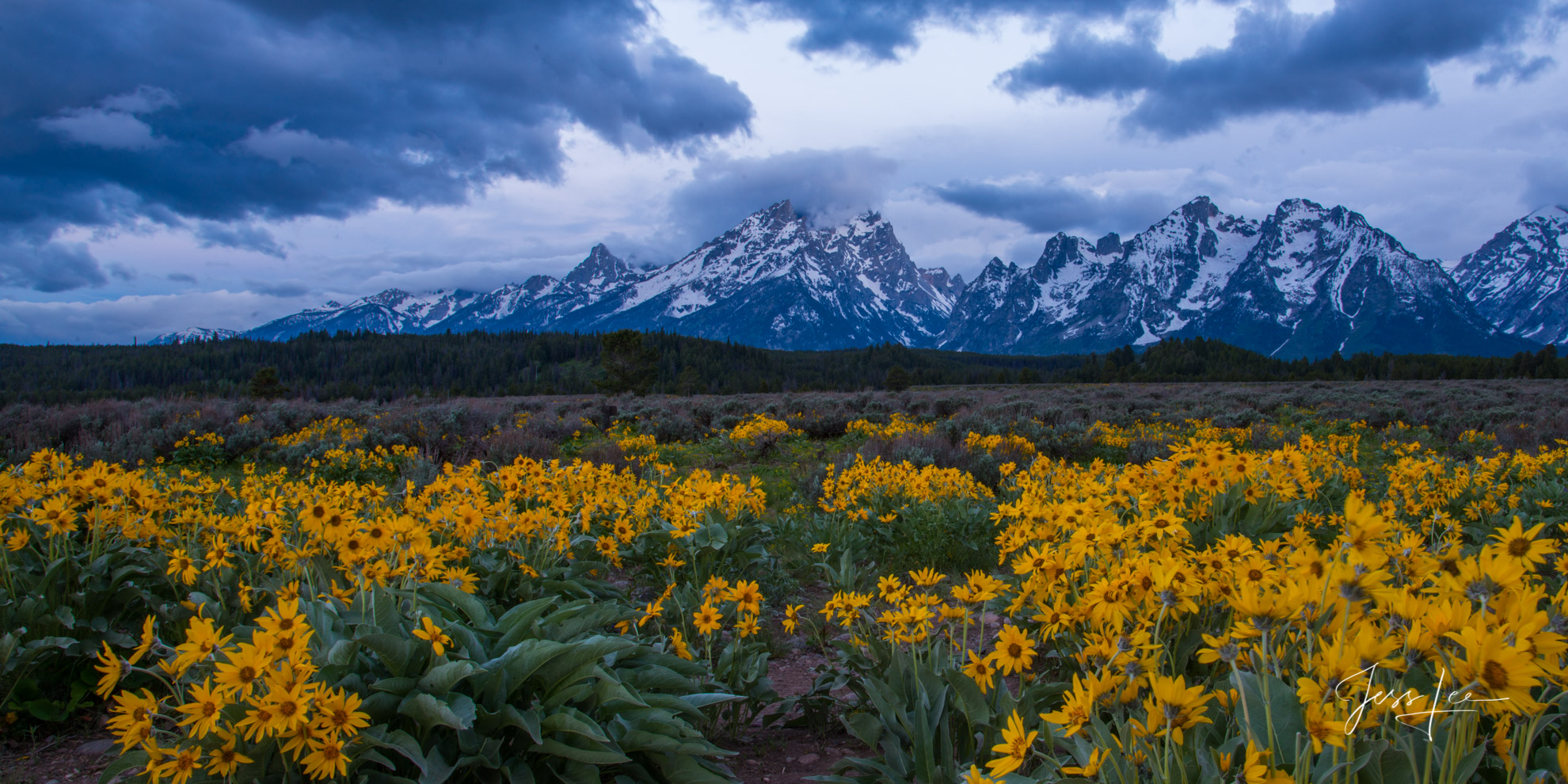 Limited Edition of 50 Exclusive high-resolution Museum Quality Fine Art Prints of a  Grand Teton spring stormPanorama Photography...