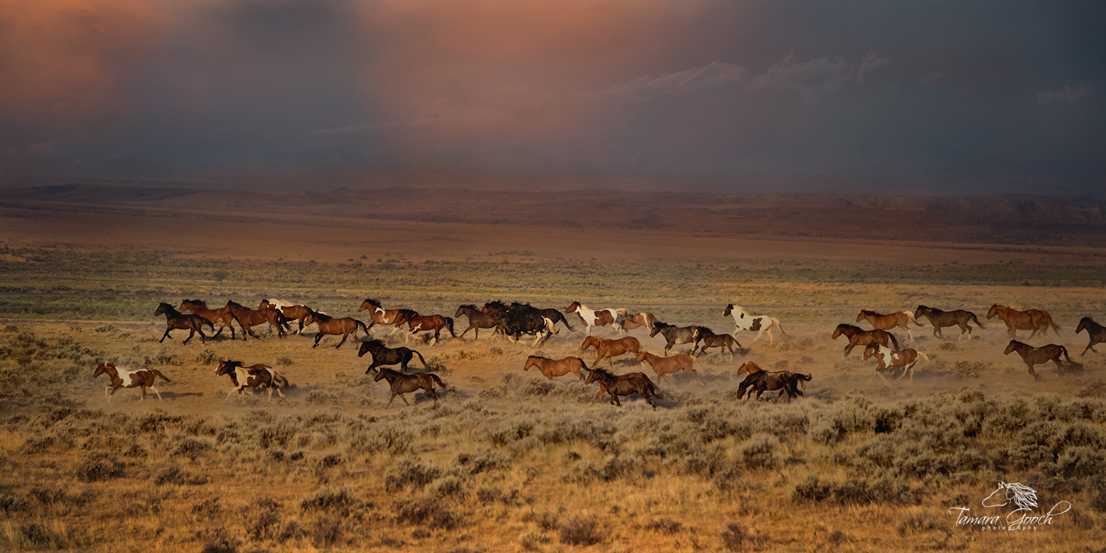 Idaho horse photographer, McCullough Peaks, WY, band, herd, equestrian, equestrian lifestyle, equestrian, wild horses, herds of horses, horses galloping, running, desert, wild, mustangs, Wyoming, thun, photo