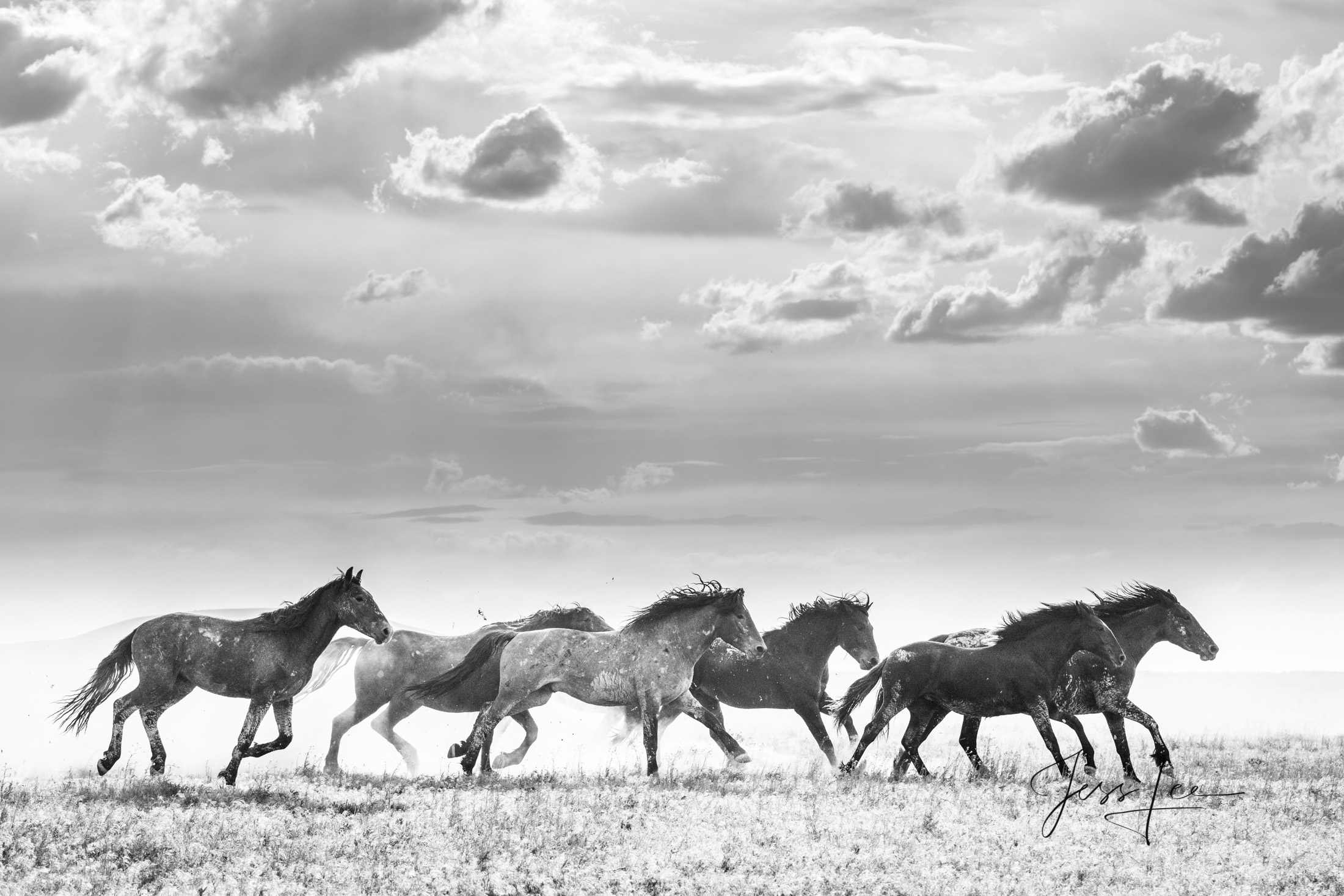 Wild Horse Freedom. Running Mustangs, Fine Art Limited Edition Photography Print from the Wild Horse Photography gallery.