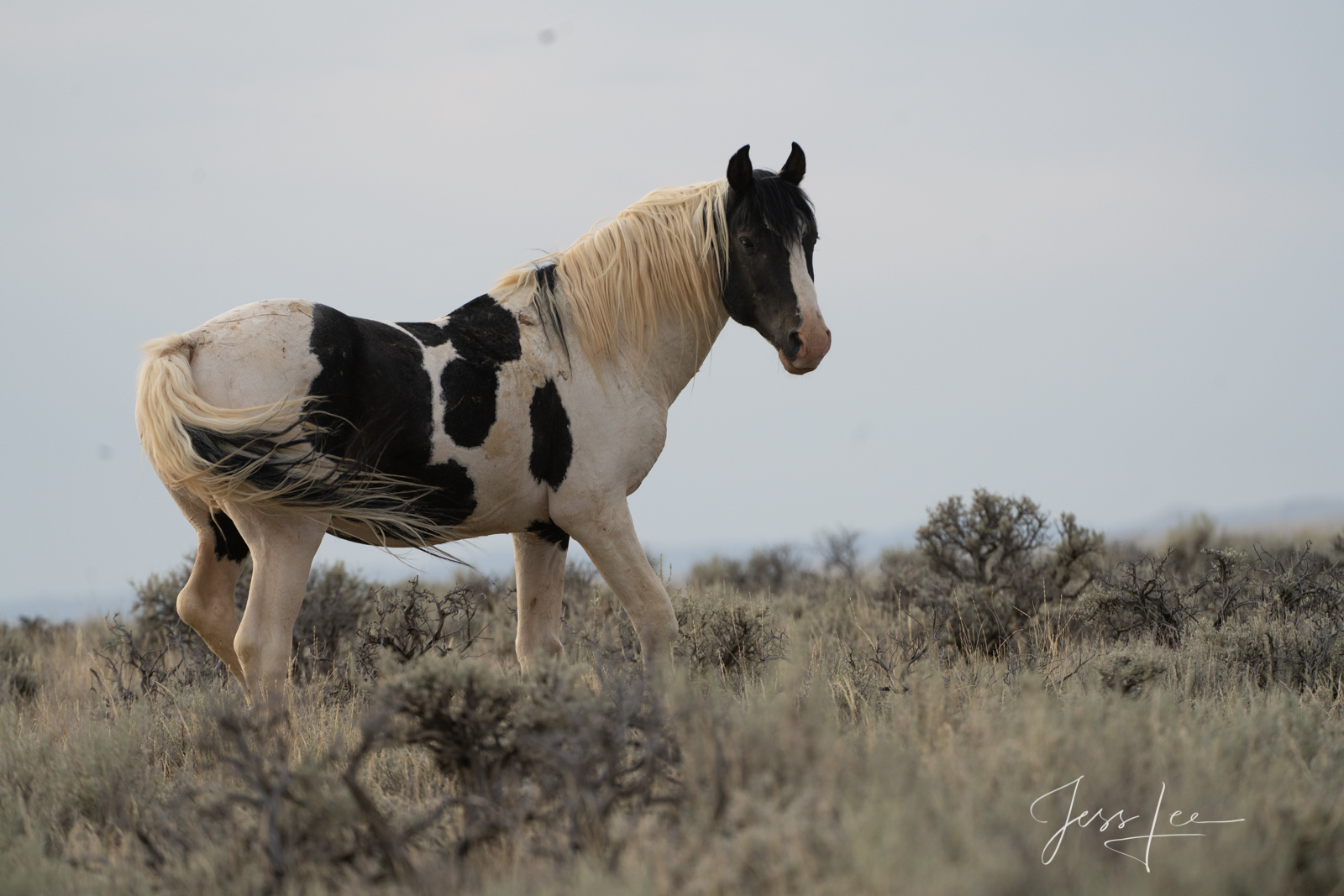 Fine Art Black and White Print of Wyoming Wild Horses. Limited Edition of 250 Luxurious Prints.  Choose the style, size, and...