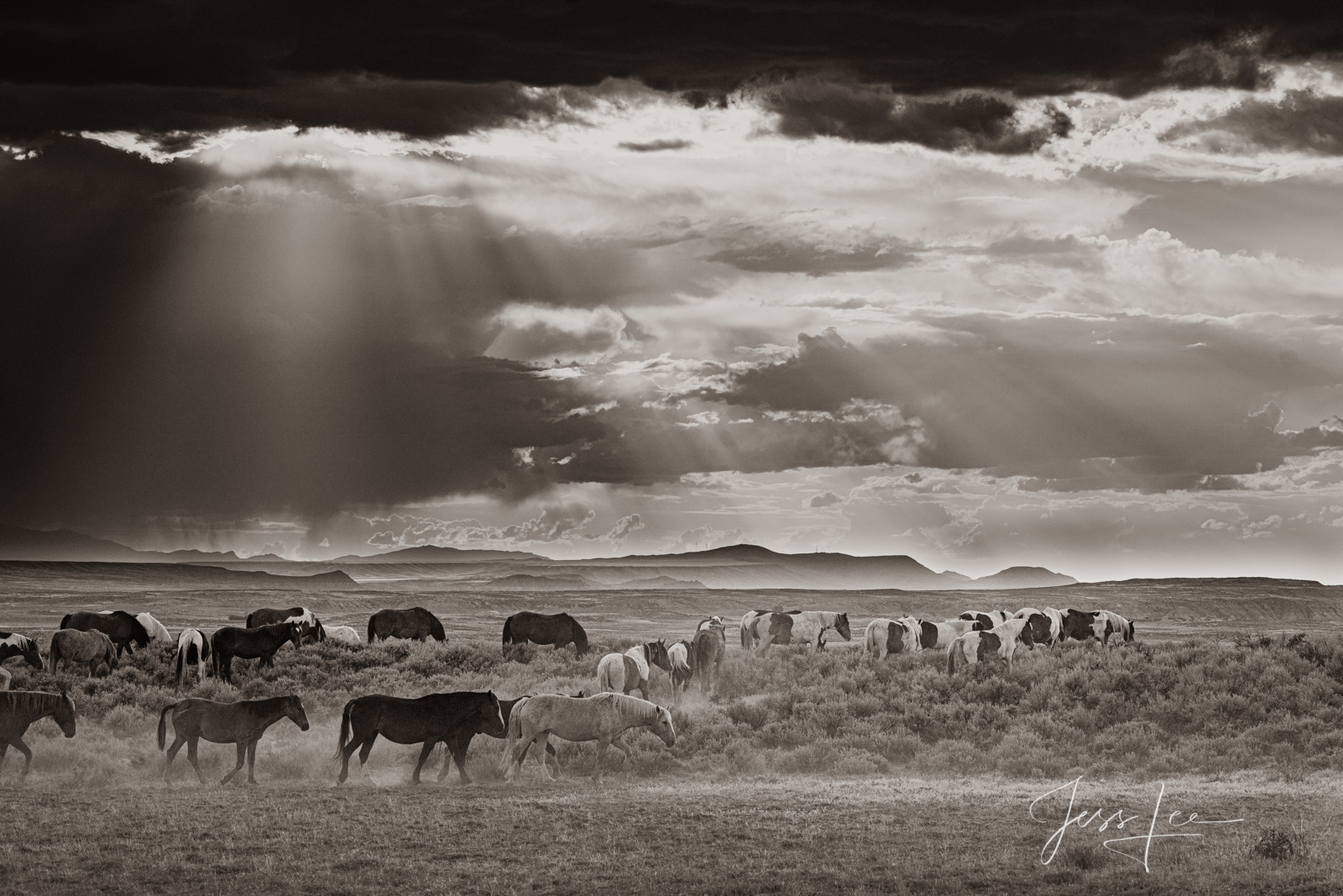 Wyoming Mustang herd on the move as an ominous storm rolls in.