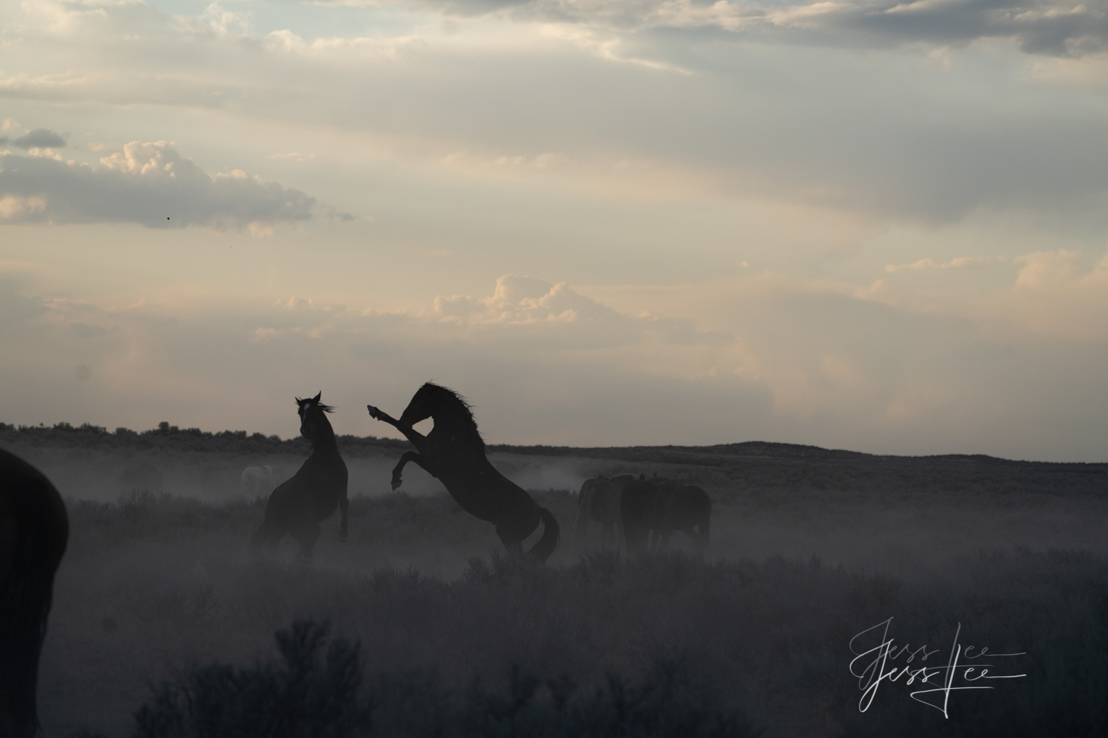 Fine Art Print of Wyoming Wild Horses. Sparing.  Limited Edition of 250 Luxurious Prints.  Choose the style, size, and medium...
