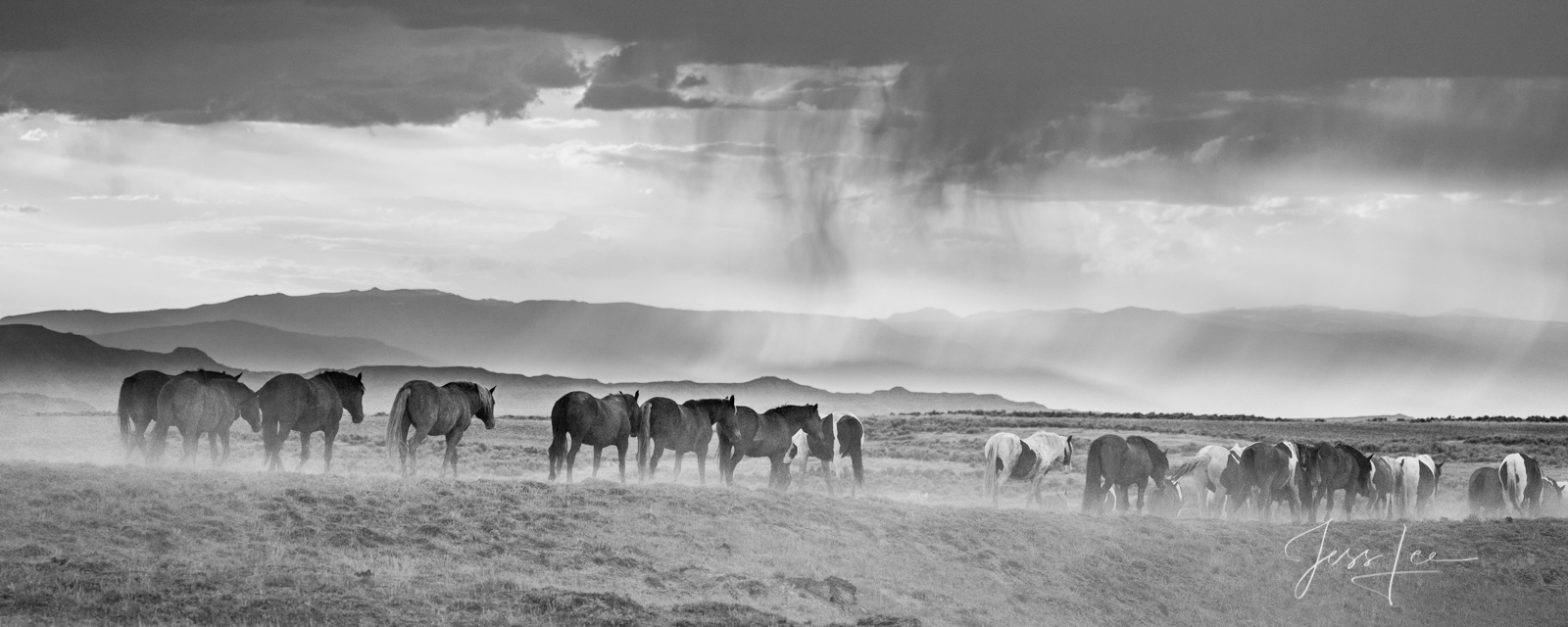 Fine Art Print of Wyoming Wild Horses. Limited Edition of 250 Luxurious Prints.  Choose the style, size, and medium for your...