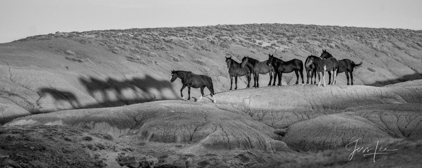 Fine Art Print of Wyoming Wild Horses and their shadow. Limited Edition of 250 Luxurious Prints.  Choose the style, size, and...