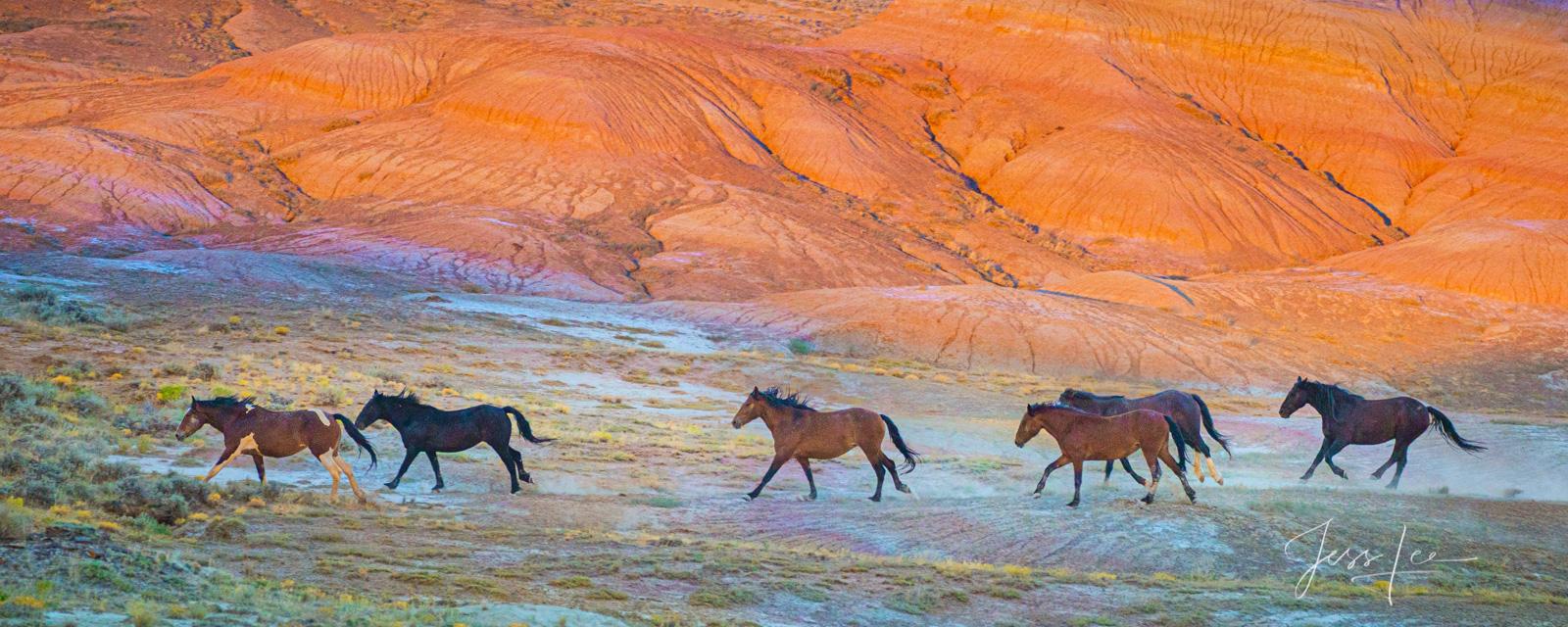 wild horse prints,, photo
