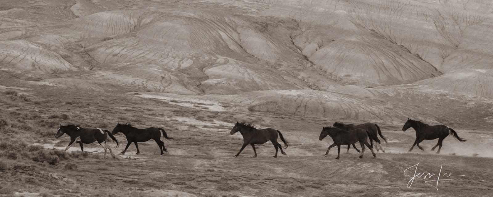 Wild horse photography, mustang, photos, prints, wall art, , photo