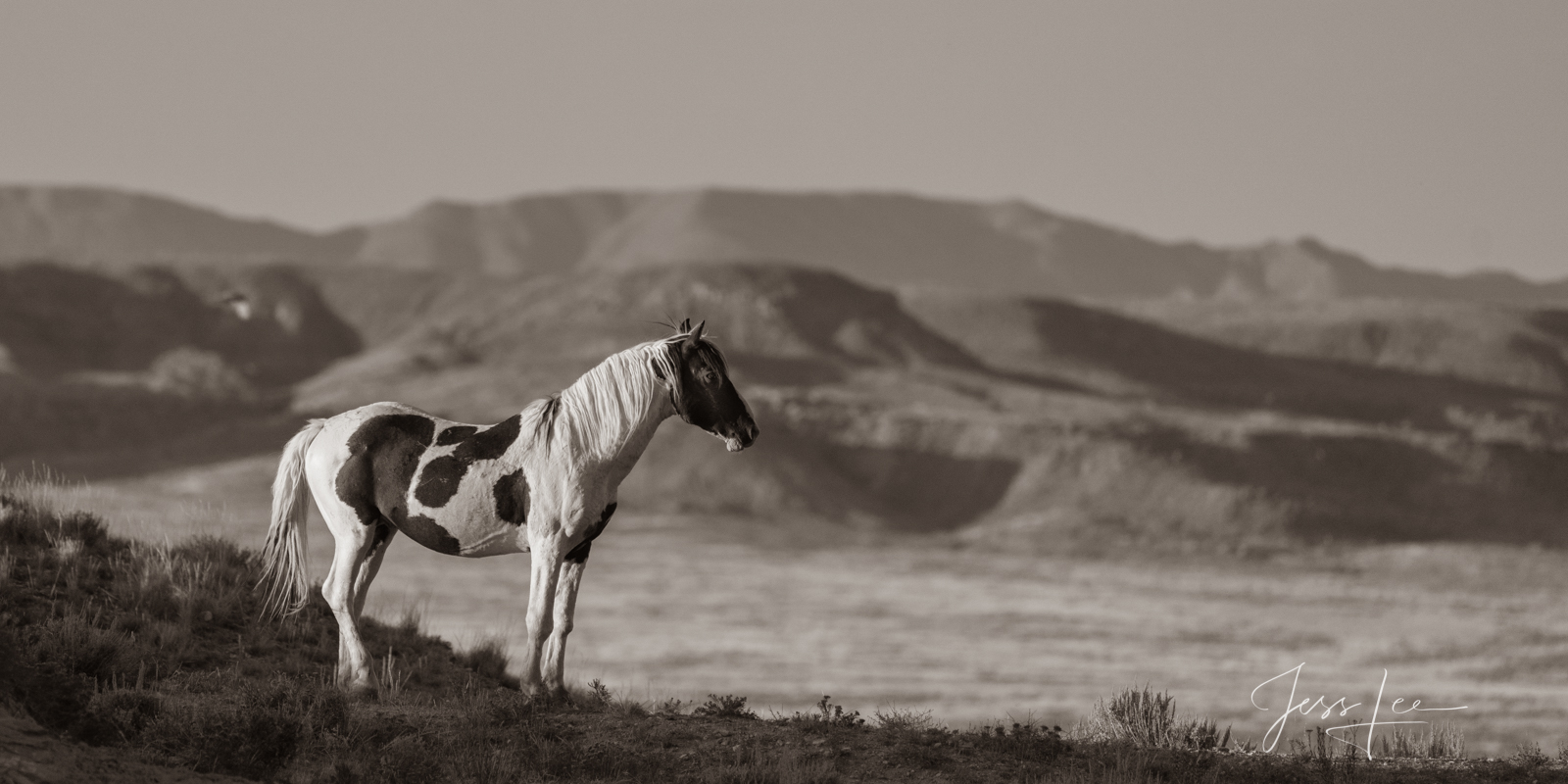 photo of wild horse in Wyoming, Mustang photography, horse photos, equine, paint, landscape, wilderness, nature, desert, black and white photography, western, ranch, fine art prints, photo