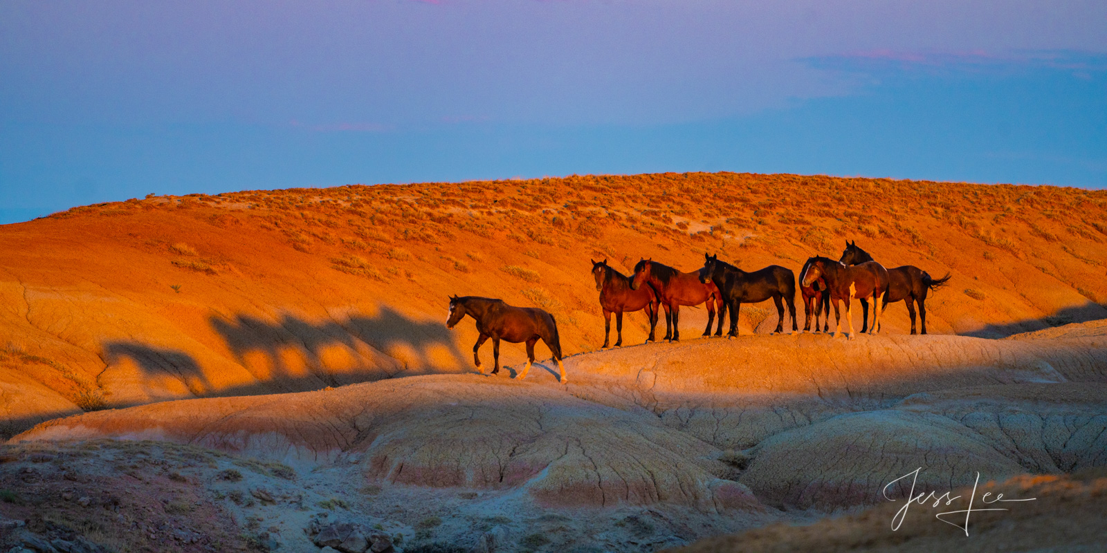 Shadow Mustangs a Fine art Limited edition Photo offered as 100 Exclusive Prints