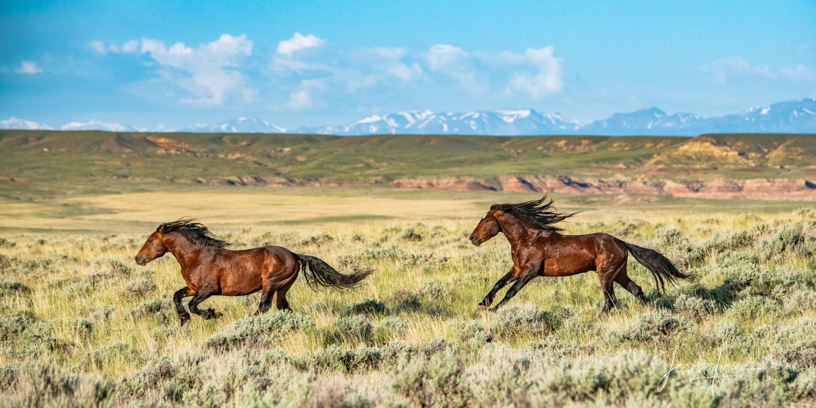 Wild Horse Photo, Wild mustang, Photography, photo, print,, photo