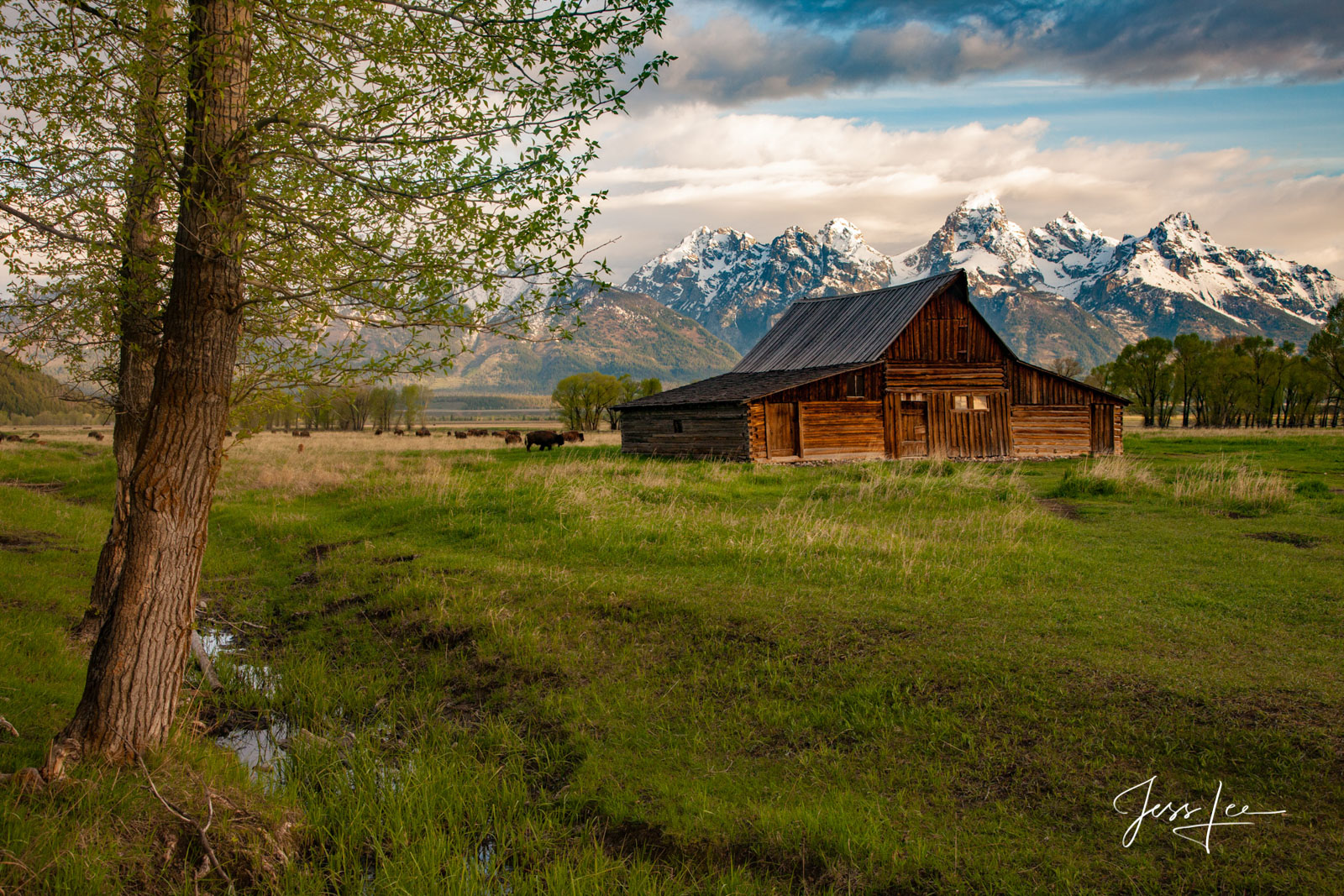 Teton Barn and mountain photography, quality, museum, fine art, print, , jess lee, artist, western, cowboy, photographer, limited edition, high quality, high resolution, beautiful, artistic, landscape, photo