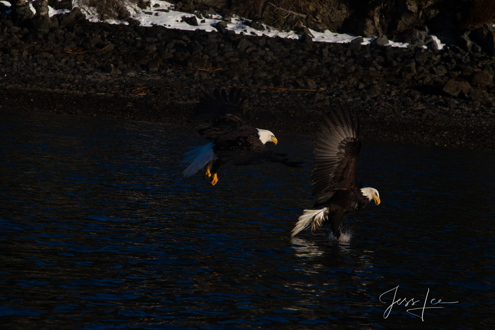 Bring home the power and beauty of the amazing fine art American Bald Eagle photograph The Rise #7 by Jess Lee from his Wildlife...