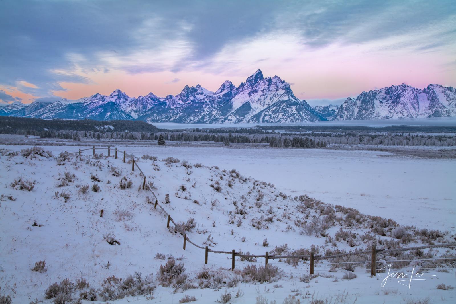 bears, wolves, mountains, wildlife, snow, trees, photo