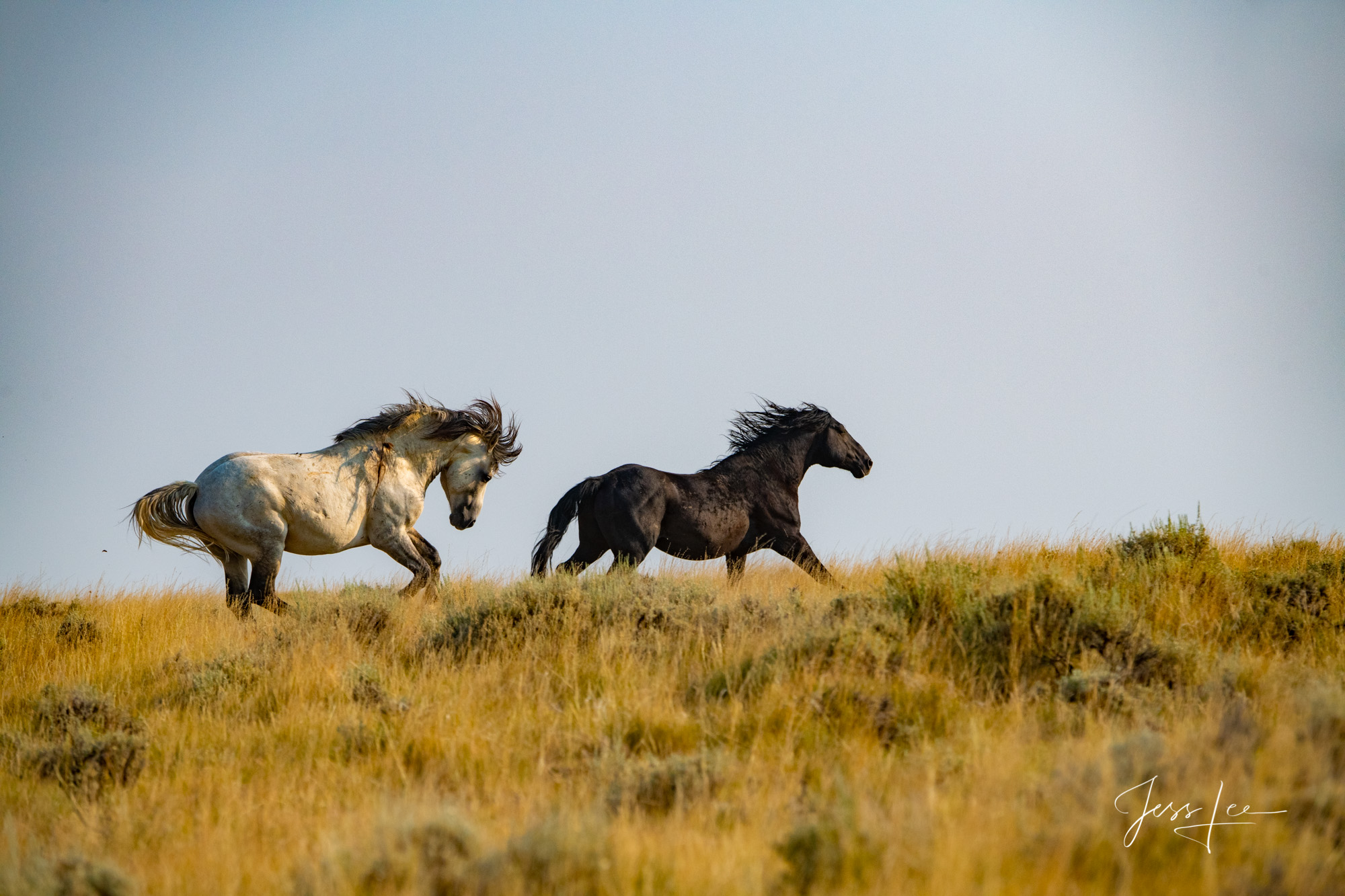 Wyoming Cowboys And Wild Horses Photography Workshop June 6 12 July 25 31 2021 Jess Lee Photos