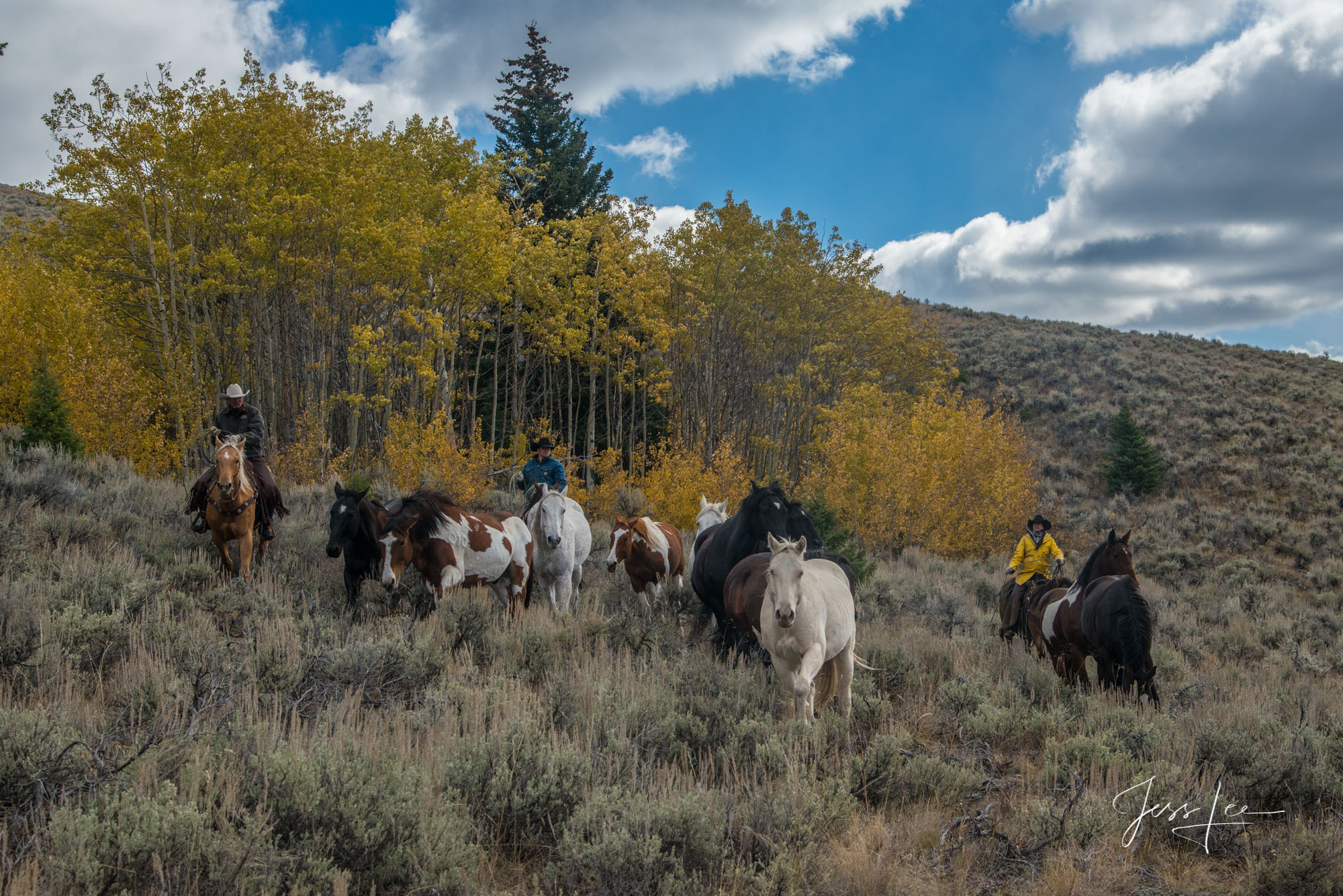 Fine Art Limited Edition Photography of Cowboys, Horses and life in the West. Wyoming horse herd running over the hill on their...