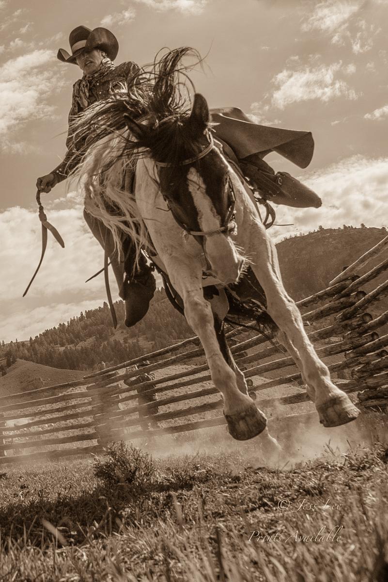 Cowboy rinding a bucking horse.