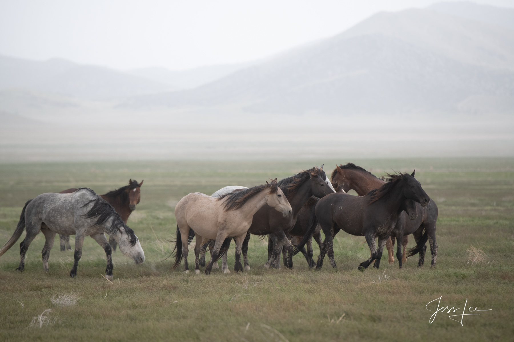 Fine Art Limited Edition Photography of Wild Horses. Utah Wild Horses or Mustangs. This is part of the luxurious collection of...