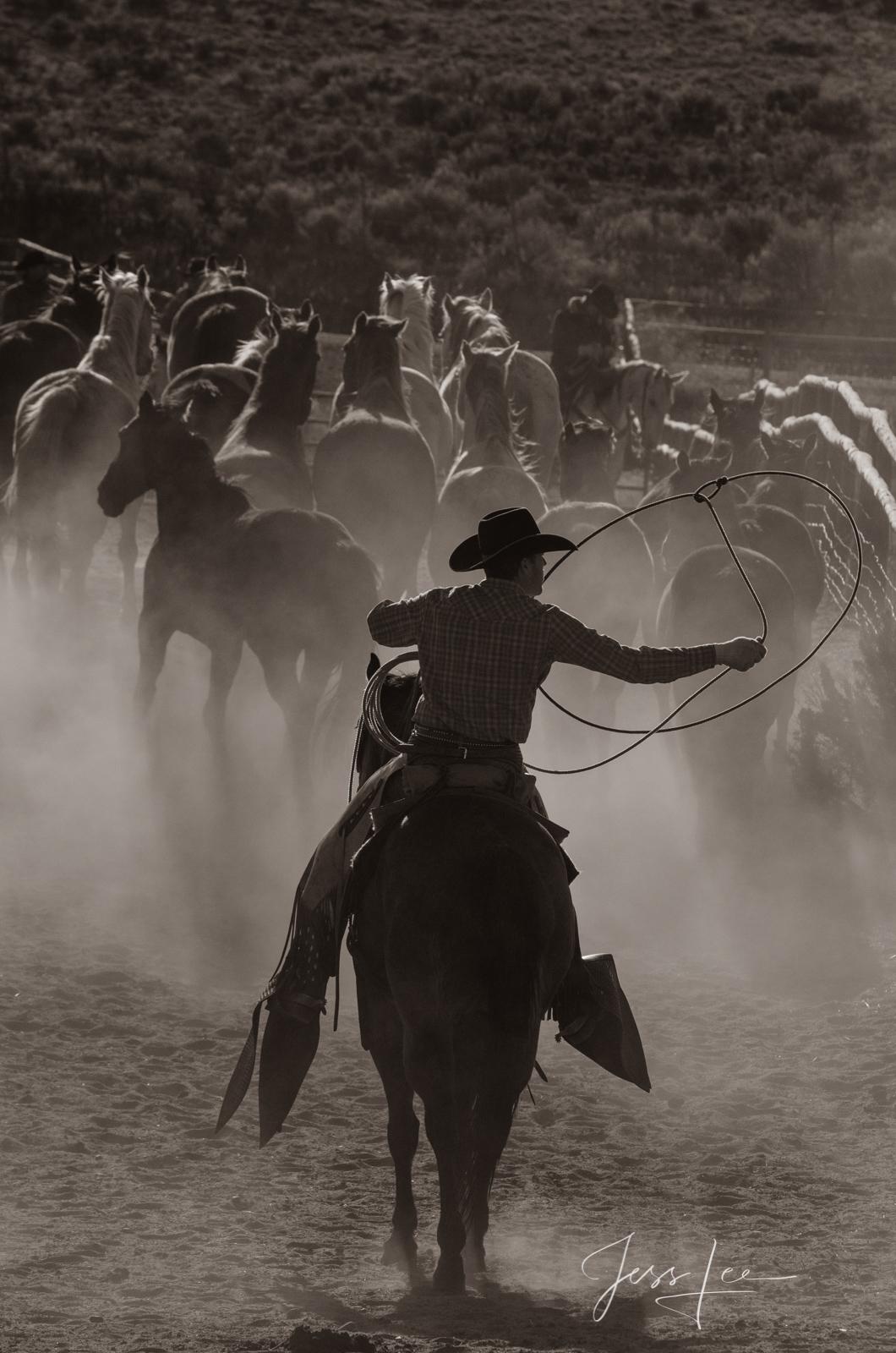 roper, shadow,cowboy,