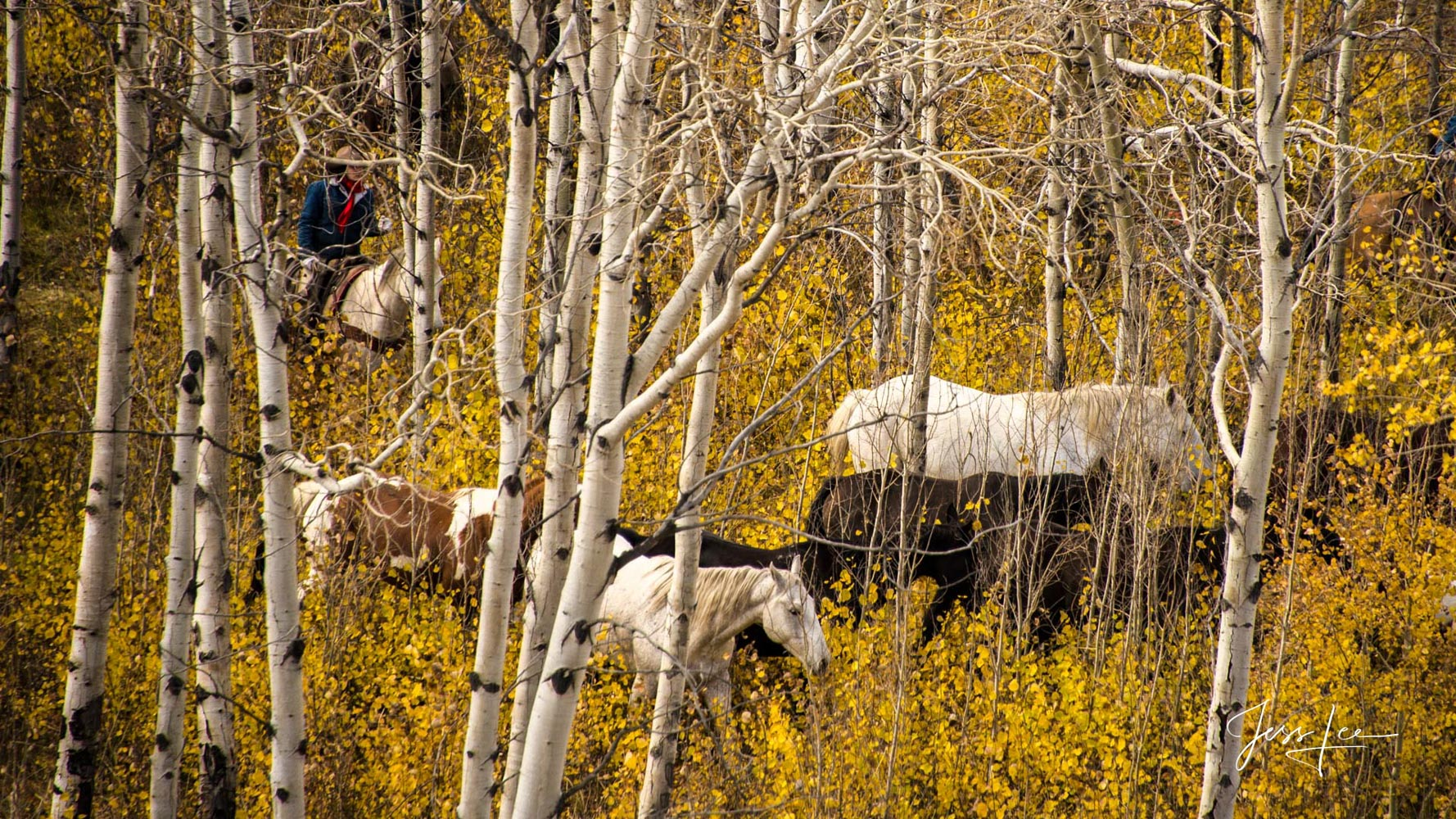 Fine Art Limited Edition of 200 Photography Prints of Cowboys, Horses and life in the West. Wyoming horse herd being rounded...