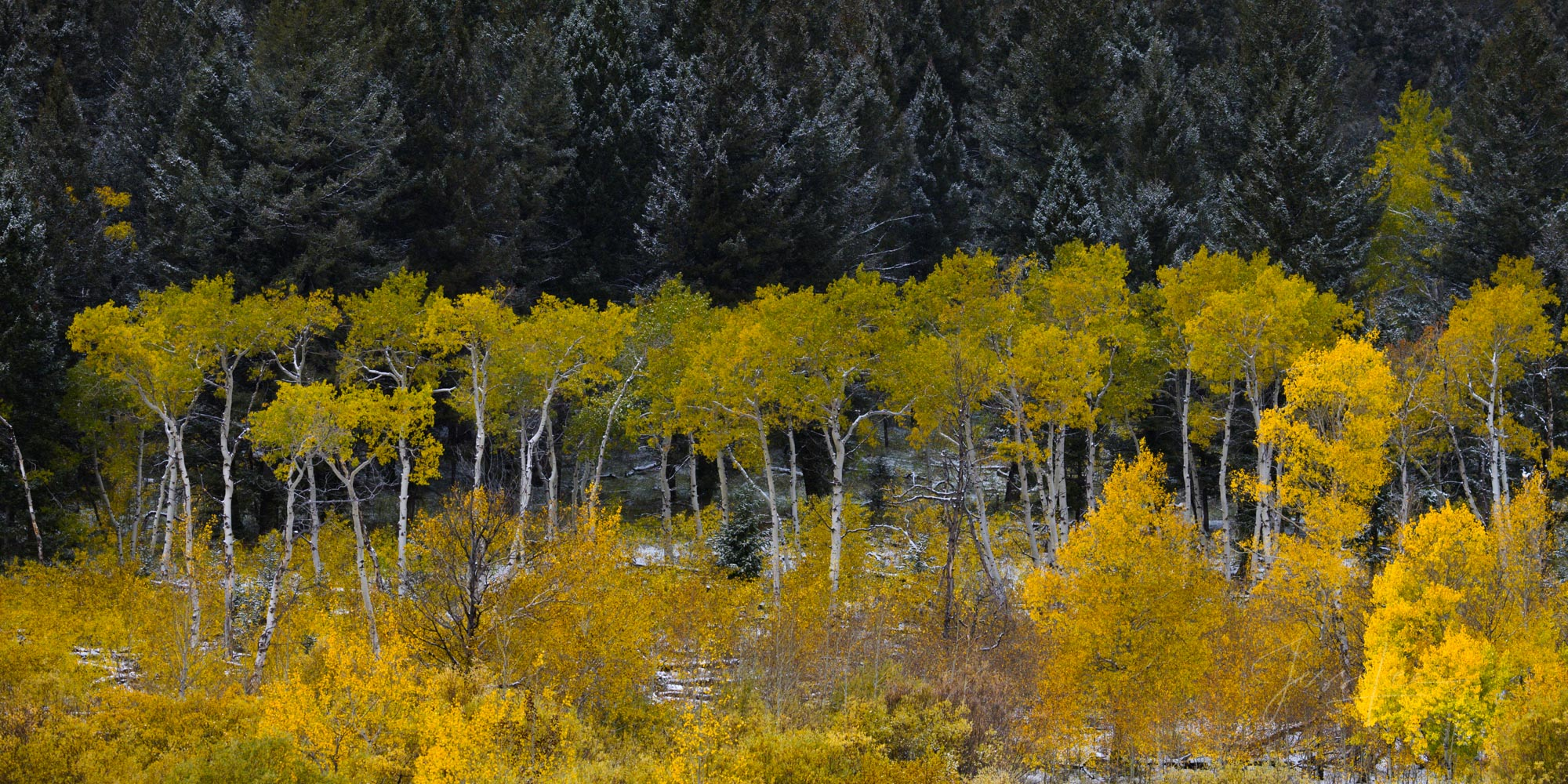 200 Fine Art Limited Edition prints of this photo depicting the layers of a autumn forest after an early season snow.