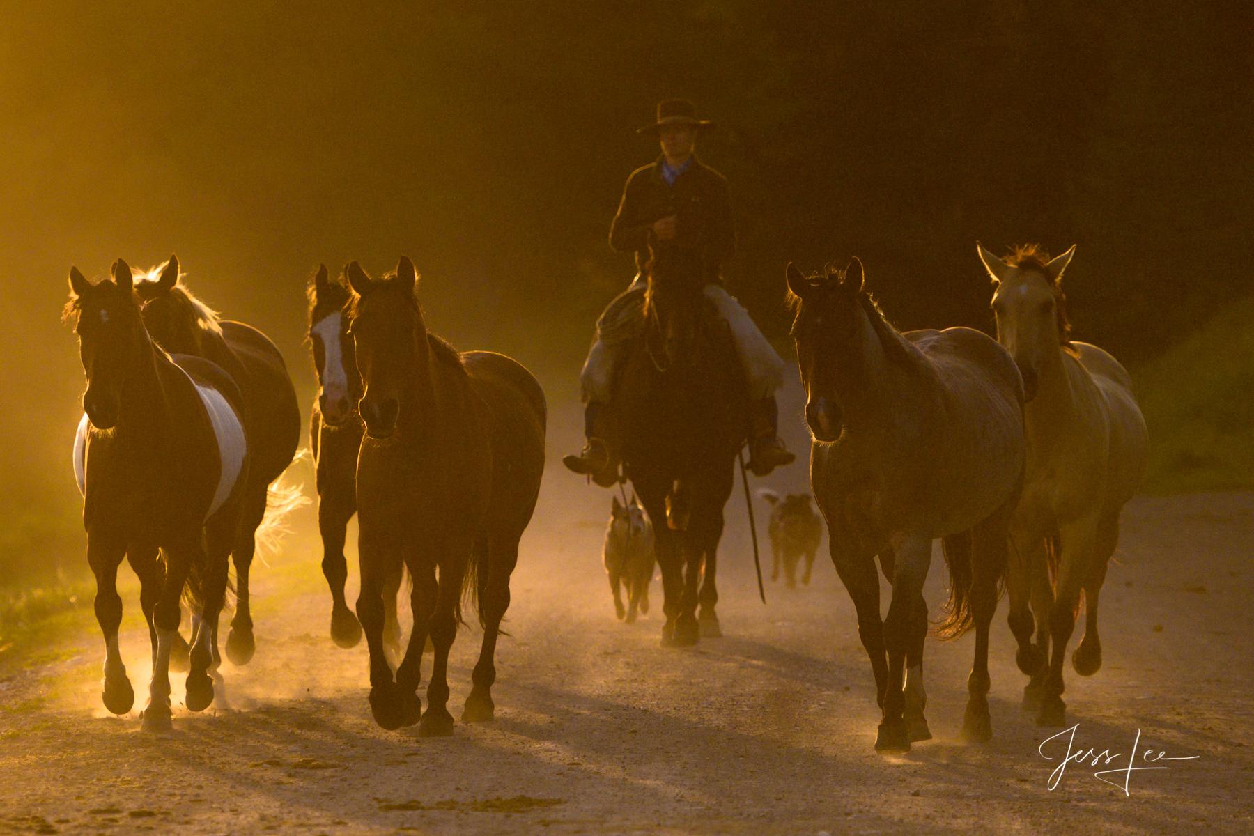 cowboy, western, photo