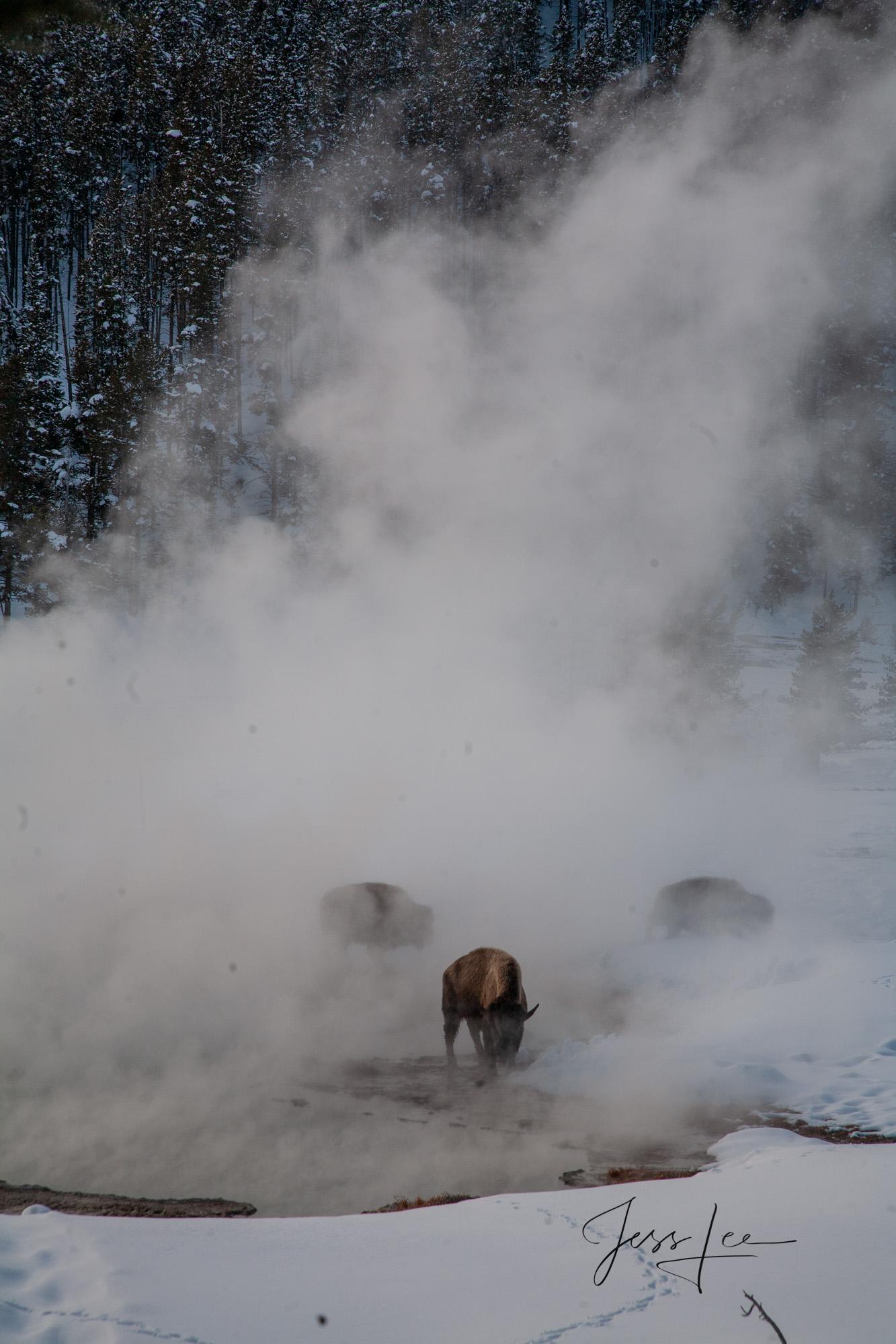 Yellowstone, national park,, photo